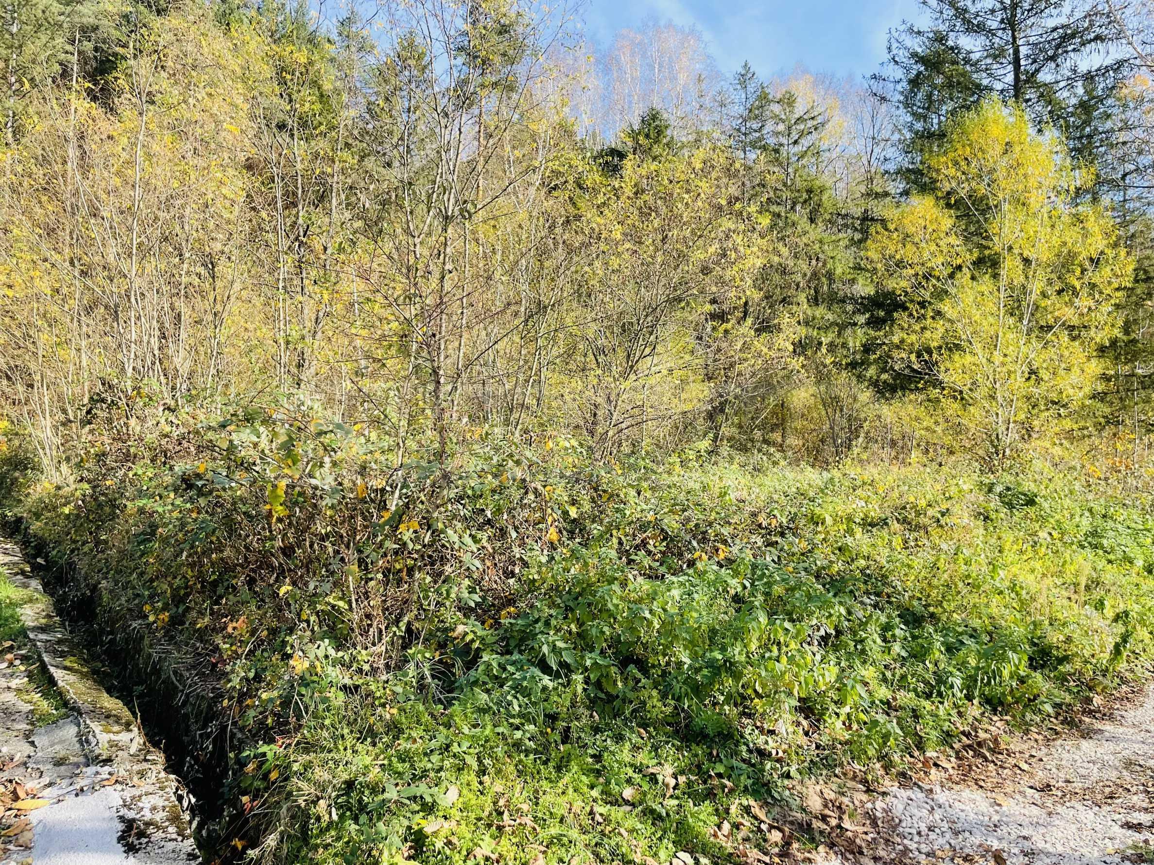 Geregeltes Grundstück mit Baugenehmigung im Dorf Ribaritsa 3