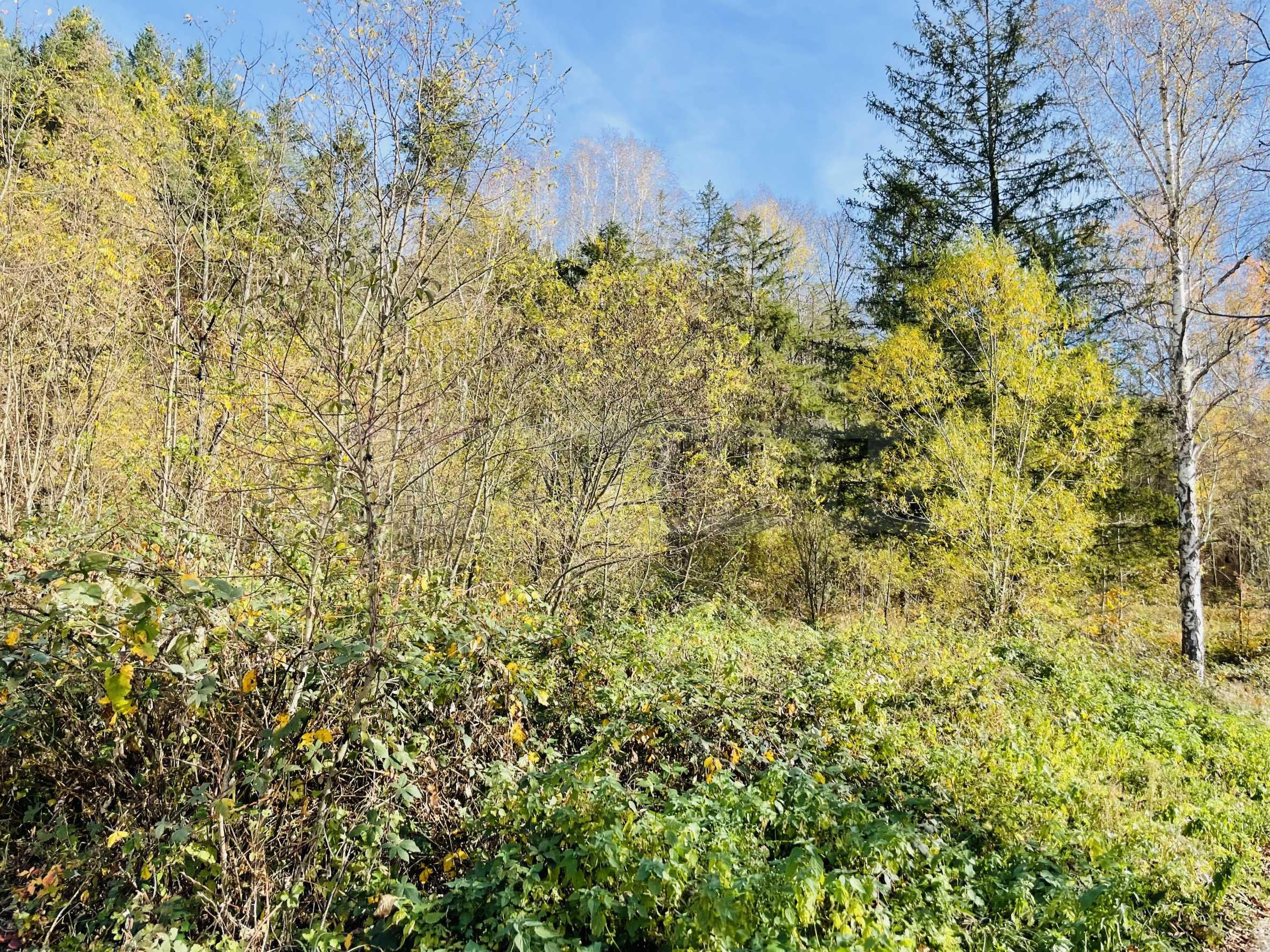 Geregeltes Grundstück mit Baugenehmigung im Dorf Ribaritsa 5