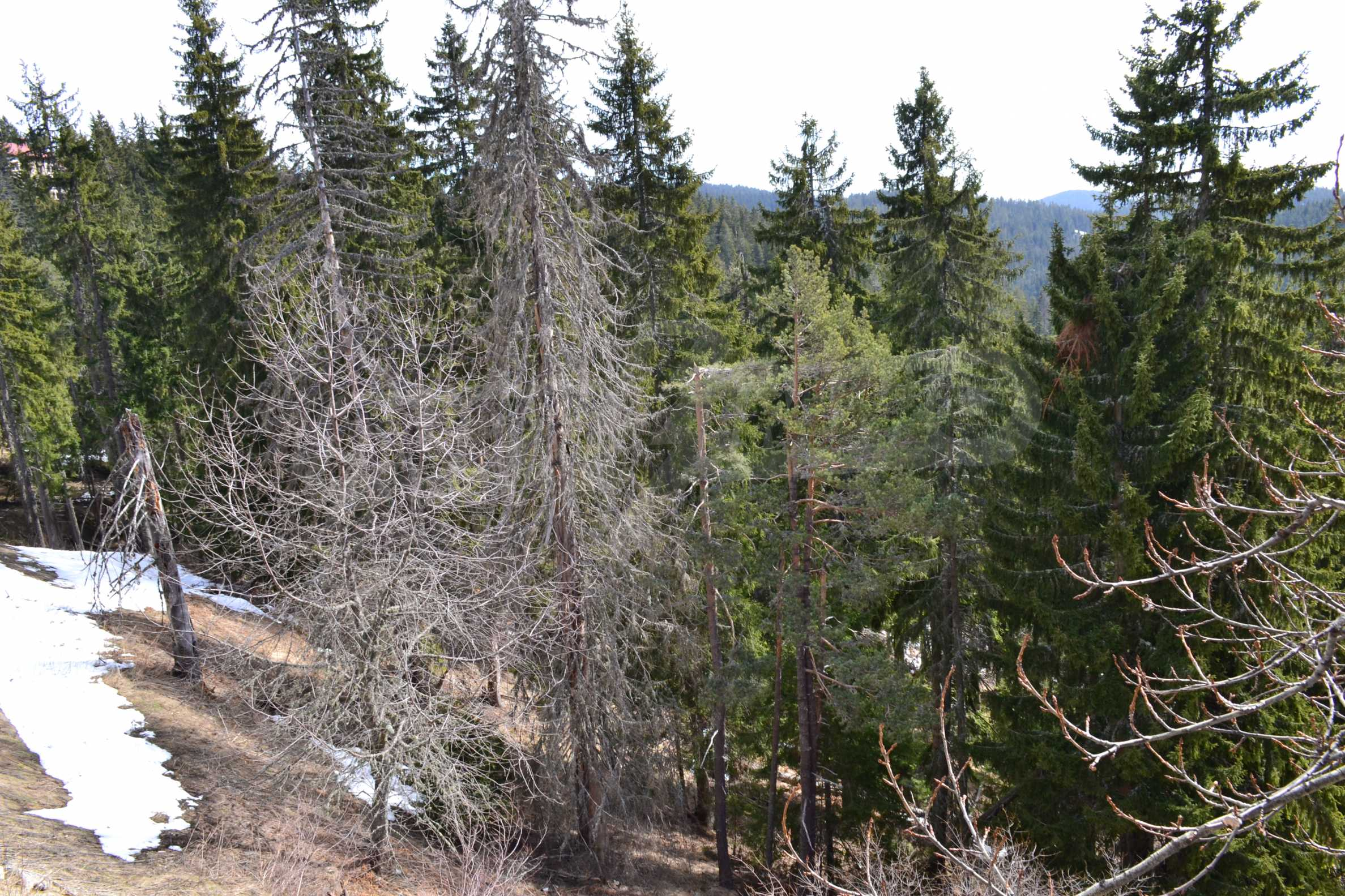 Plot of land near the center of Pamporovo with great view and view 8