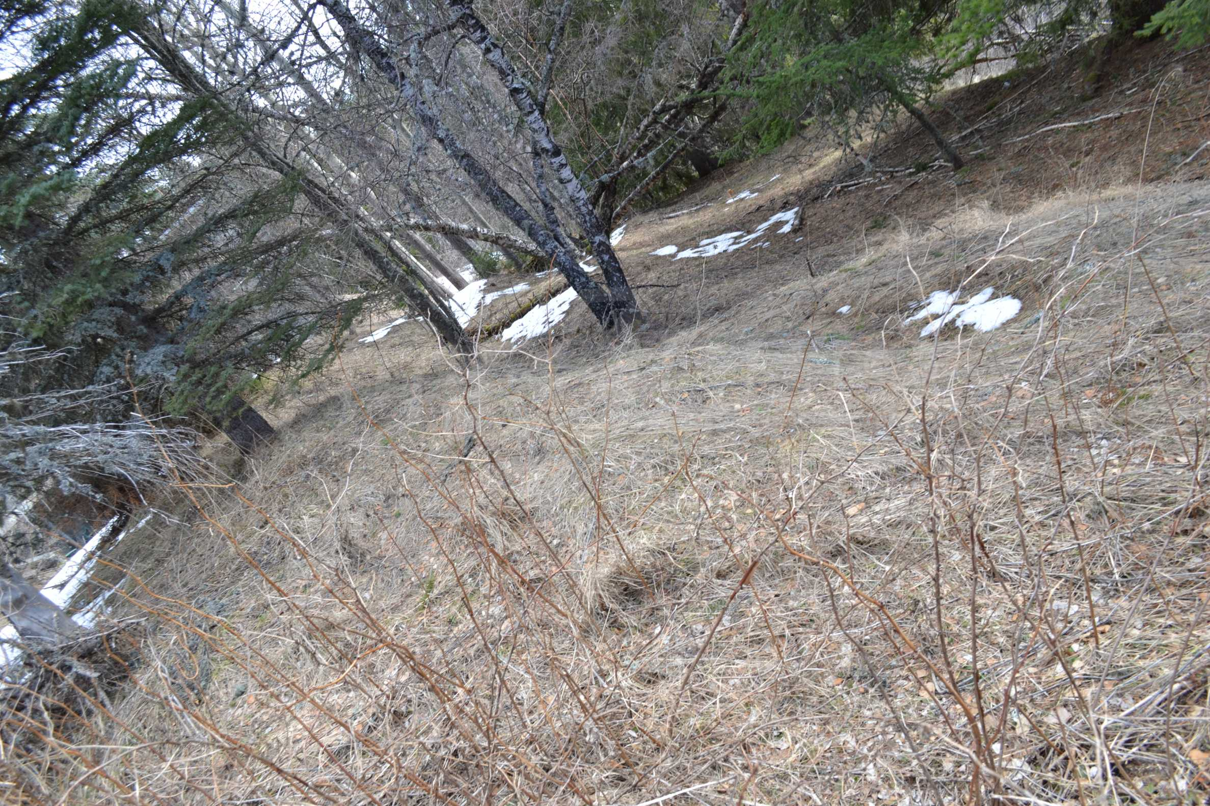 Plot of land near the center of Pamporovo with great view and view 2
