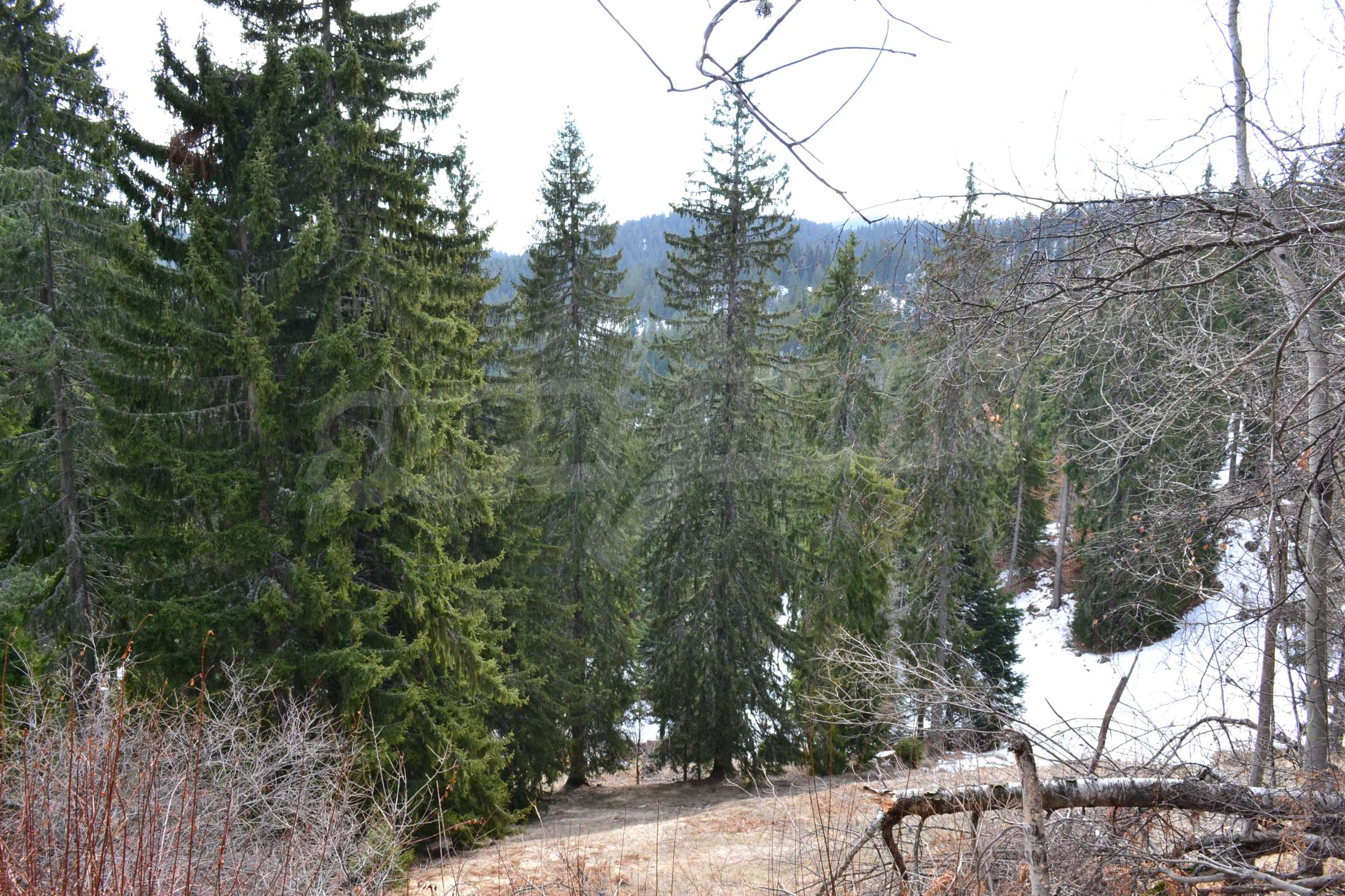 Plot of land near the center of Pamporovo with great view and view 7