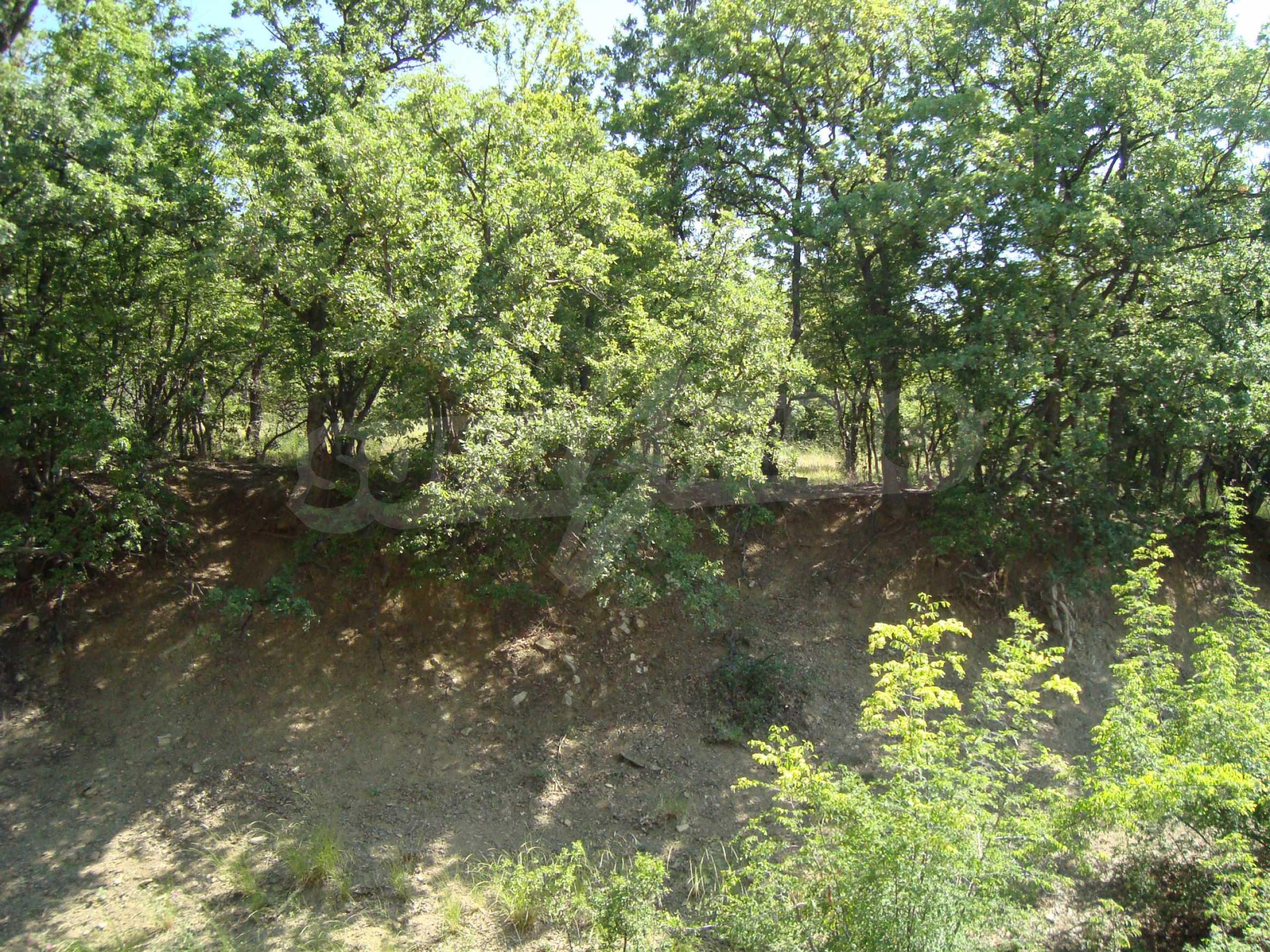 Vast plot of land for sale near Sunny Beach 10