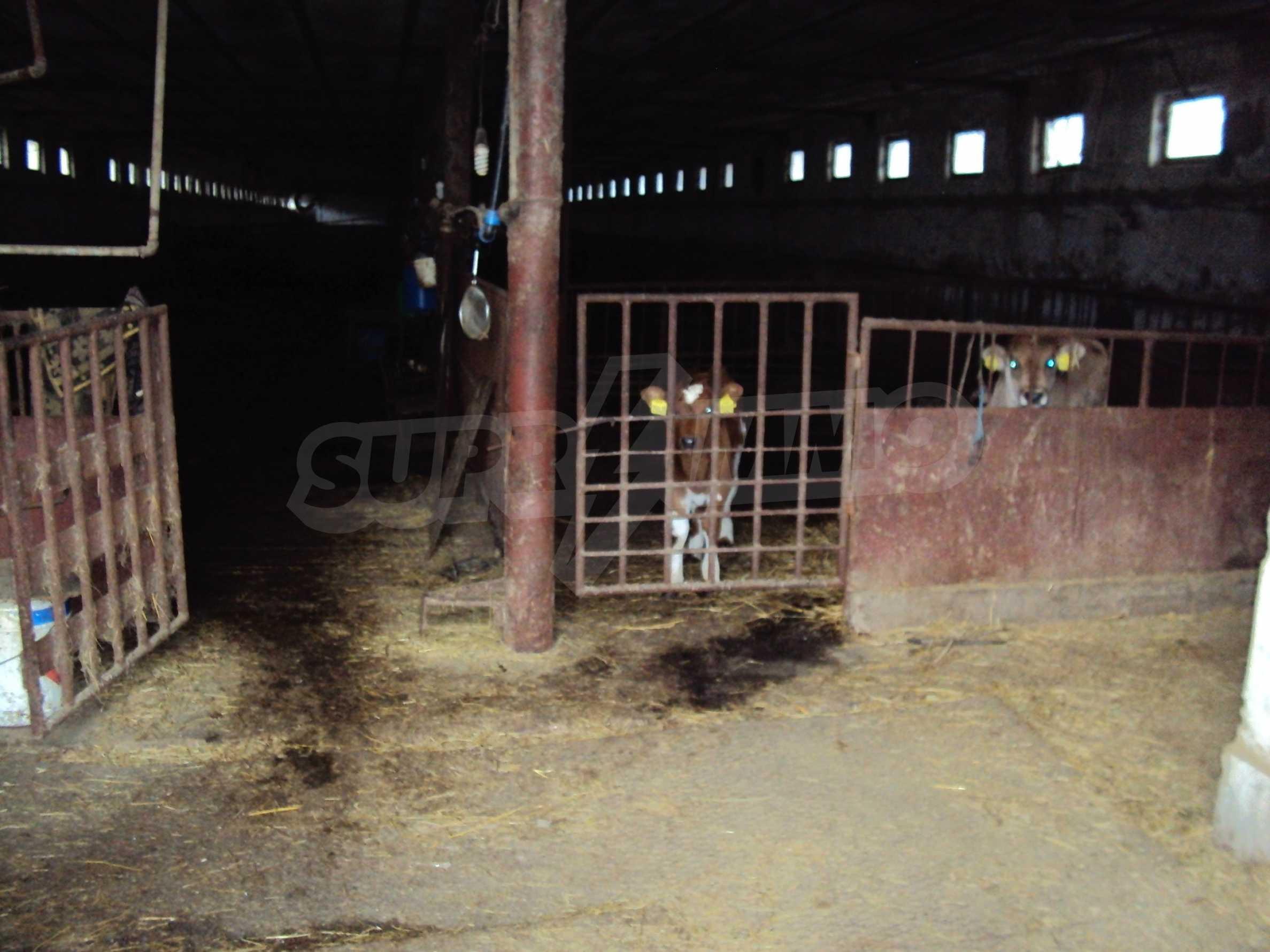 Farm in a small town 24 km from Veliko Tarnovo 12