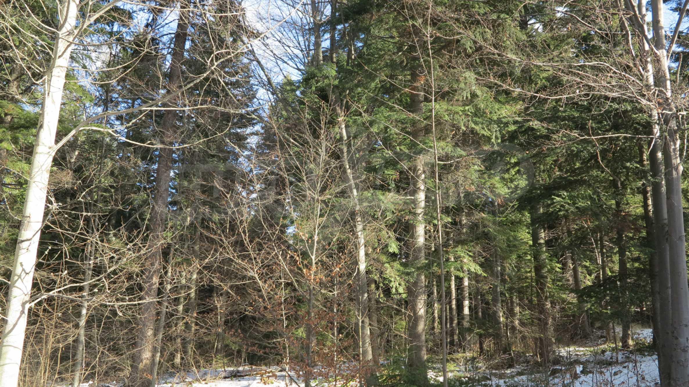 Großes Grundstück mit zweistöckiger Villa im Skigebiet Borovets 6
