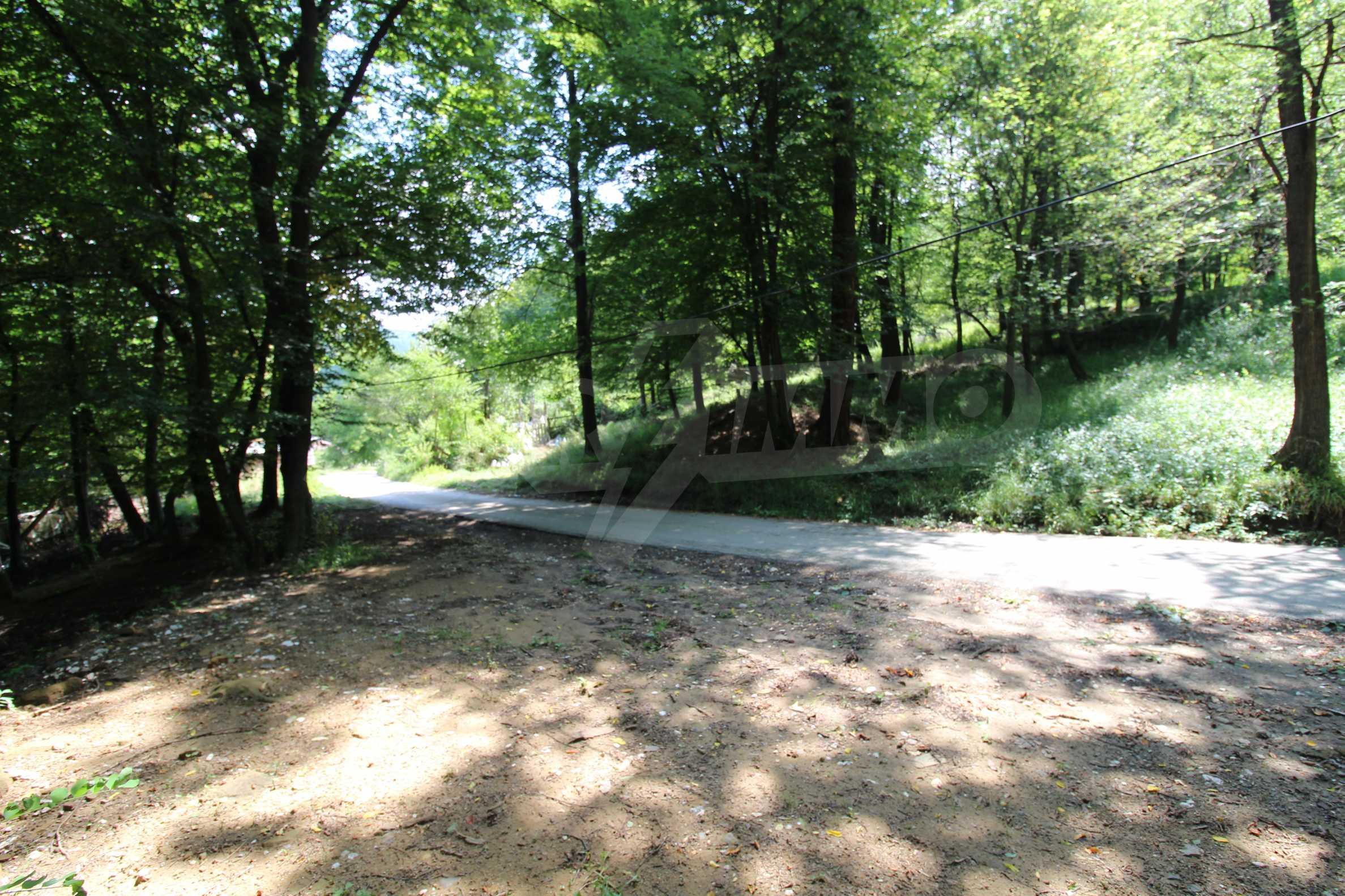 Laubwald in der Nähe von Trjawna