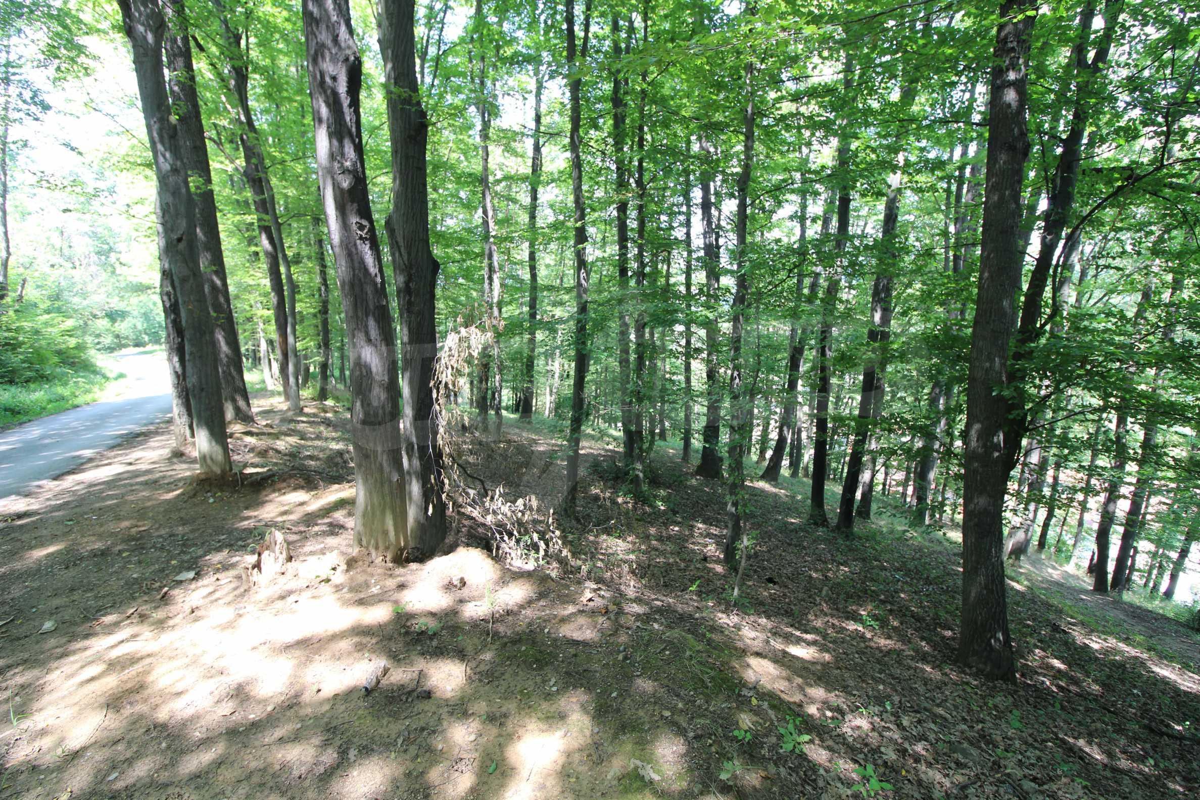 Laubwald in der Nähe von Trjawna 9