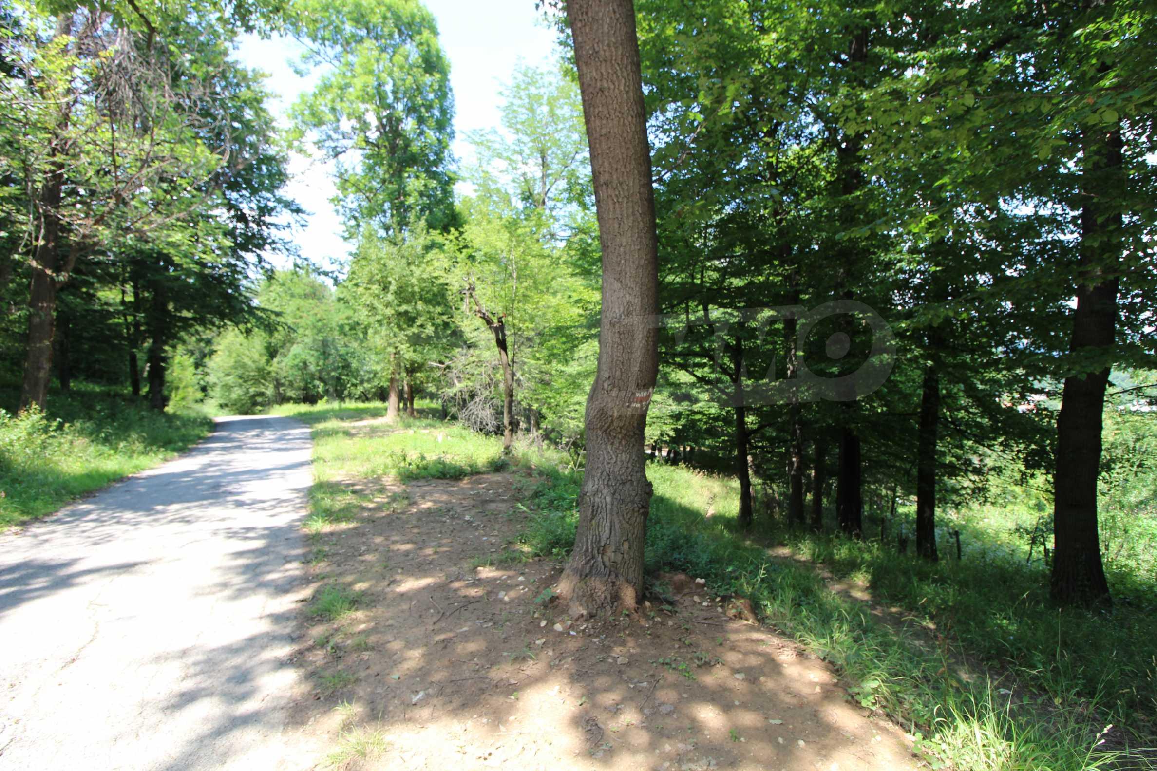 Laubwald in der Nähe von Trjawna 4