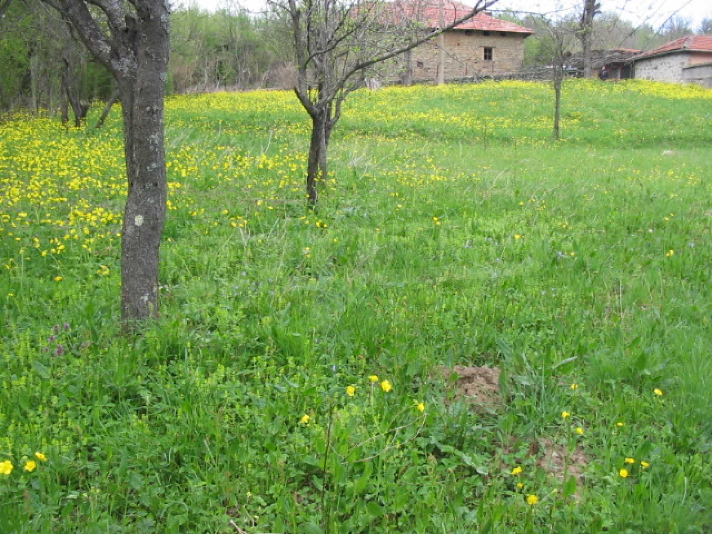 УПИ в село само на 20 км от Велико Търново  6