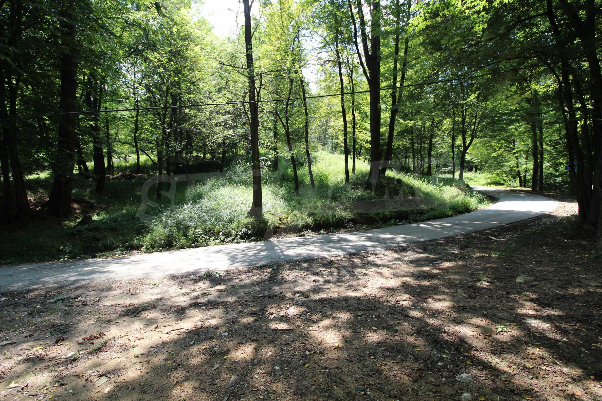 Laubwald in der Nähe von Trjawna 1