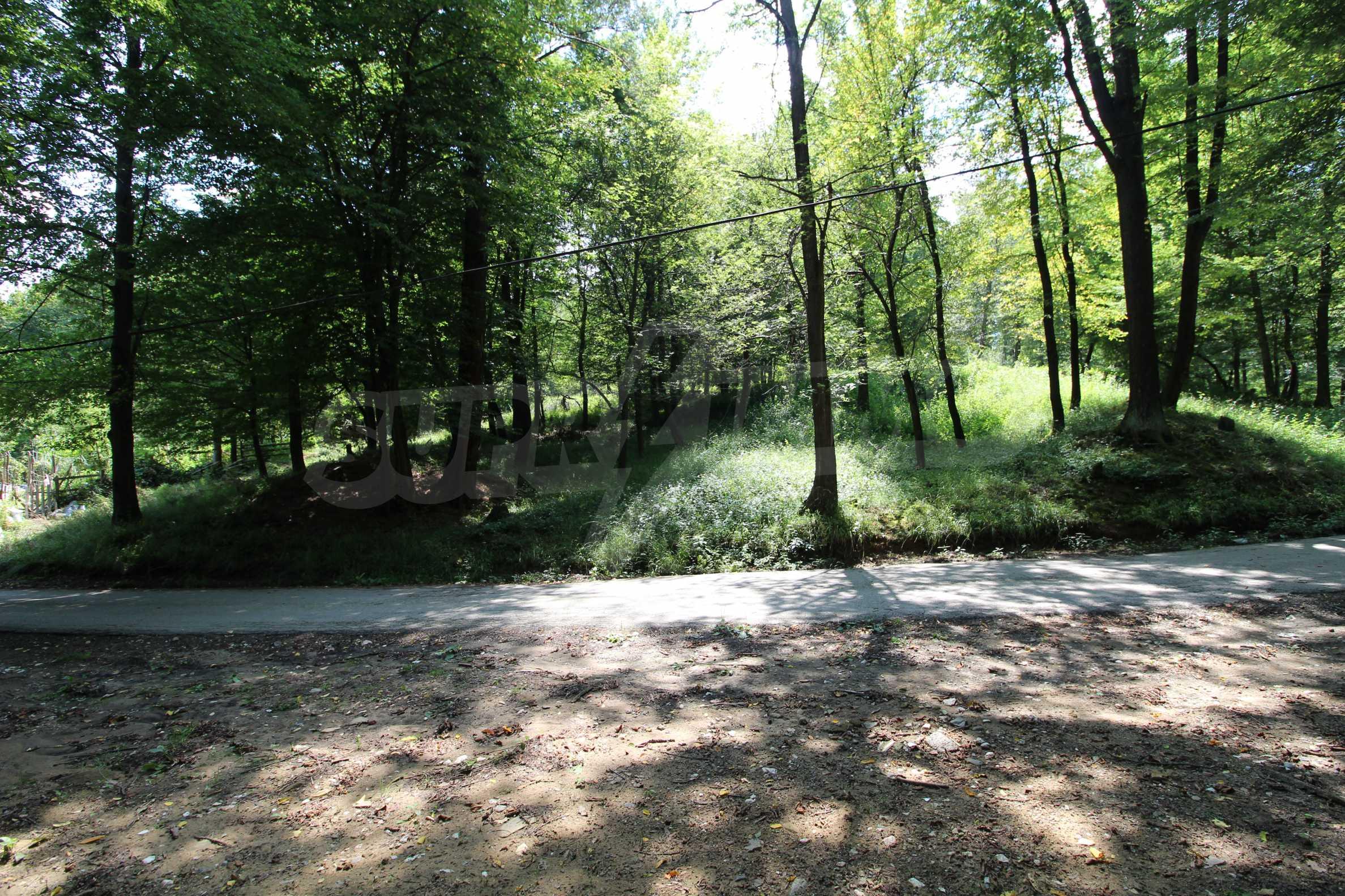 Laubwald in der Nähe von Trjawna 2