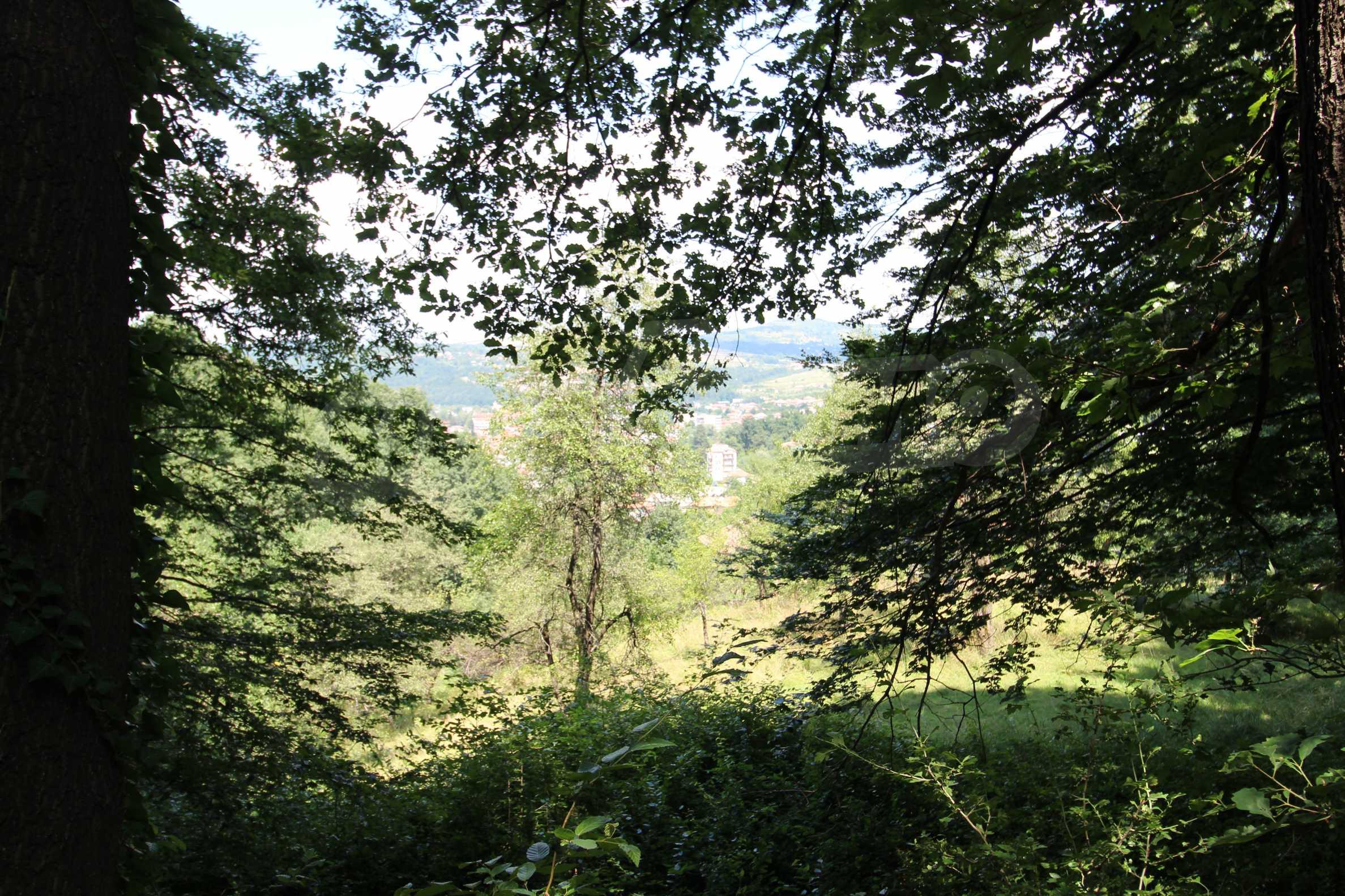 Laubwald in der Nähe von Trjawna 3