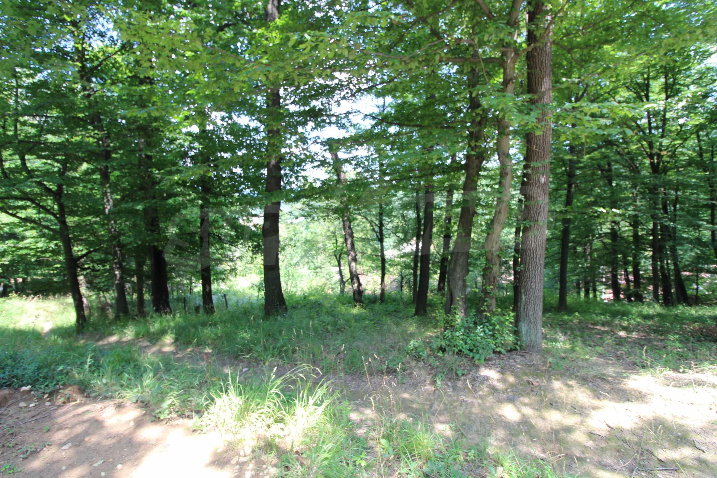 Laubwald in der Nähe von Trjawna 5