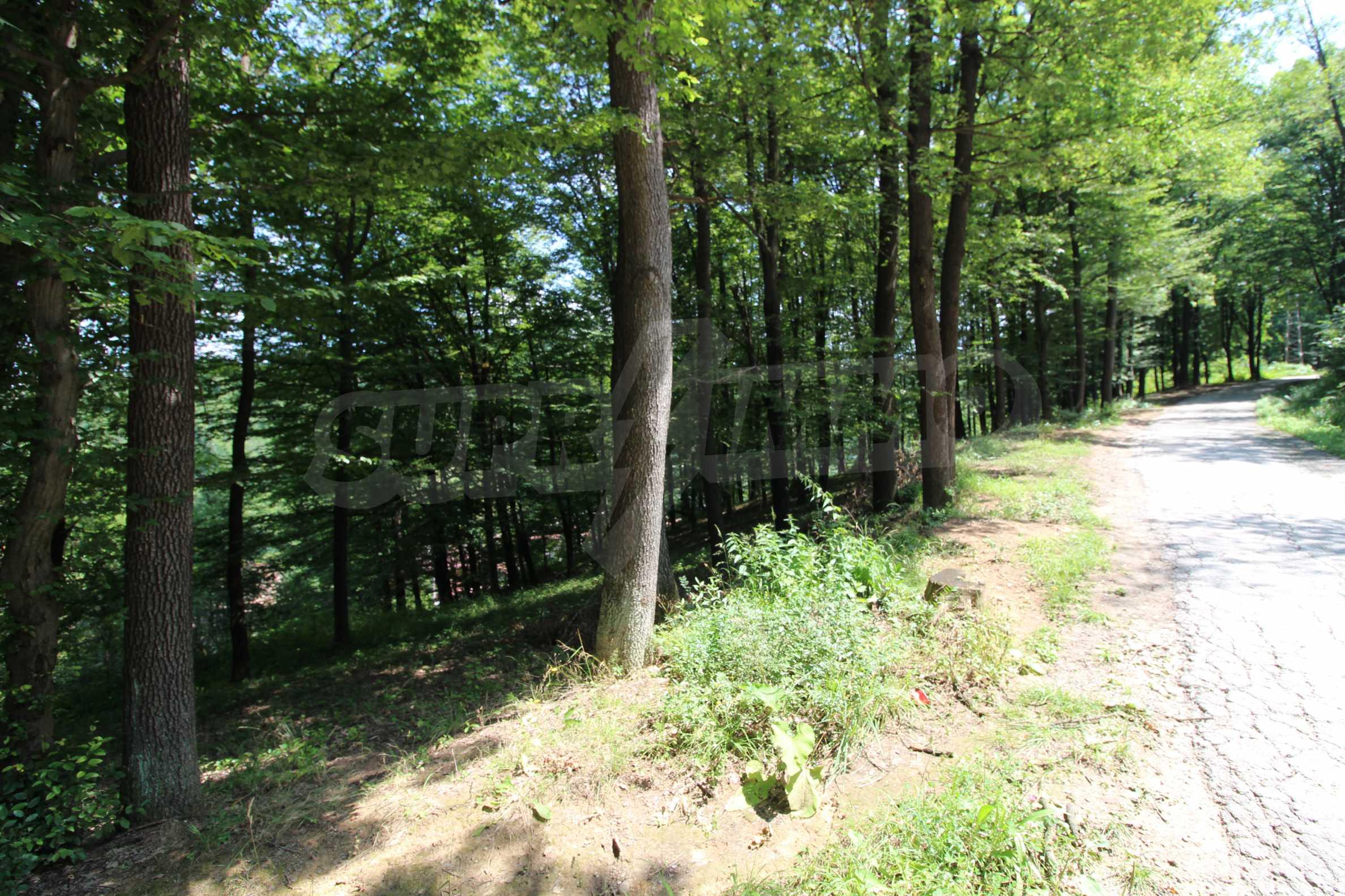Laubwald in der Nähe von Trjawna 6