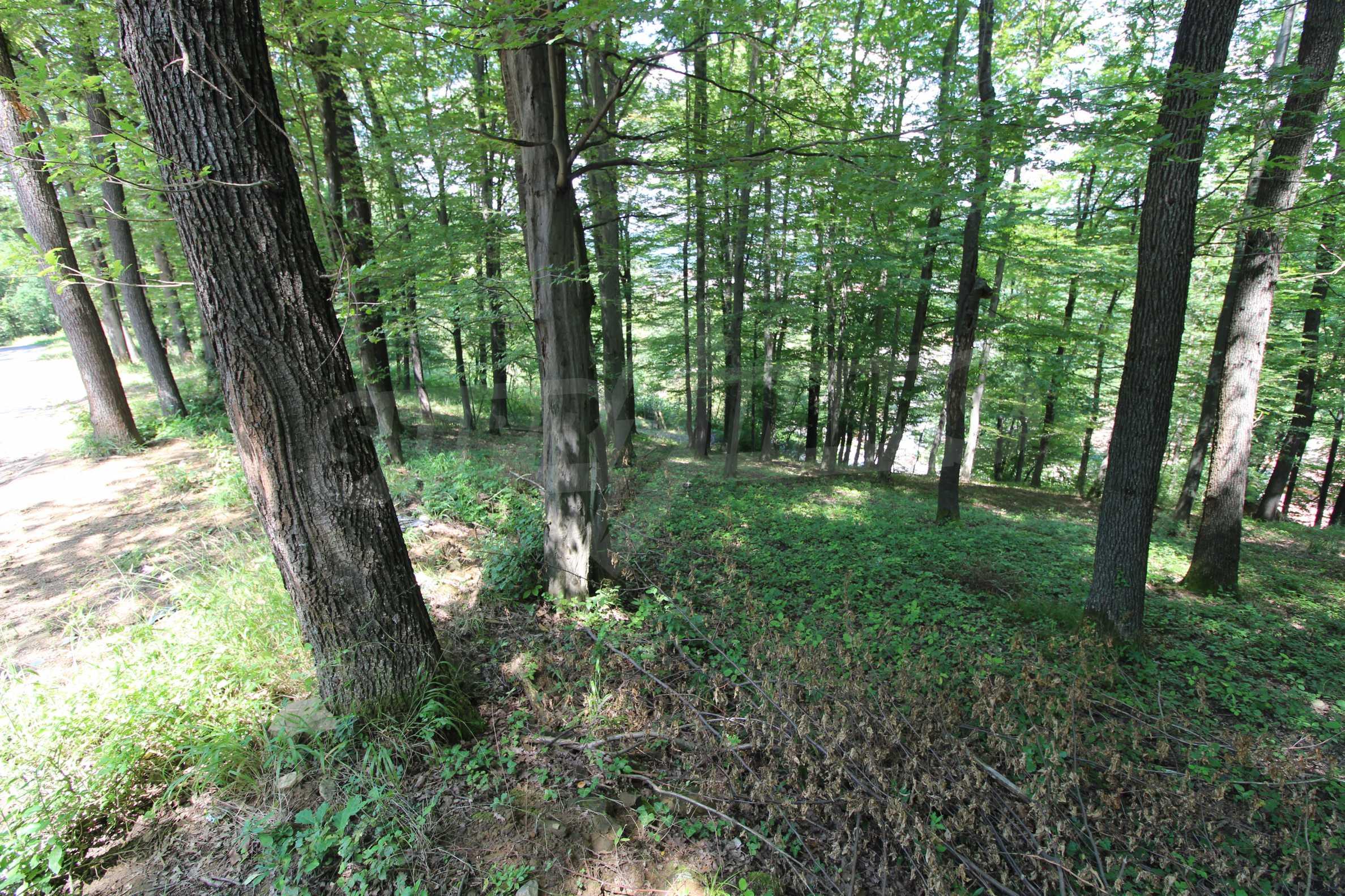 Laubwald in der Nähe von Trjawna 7