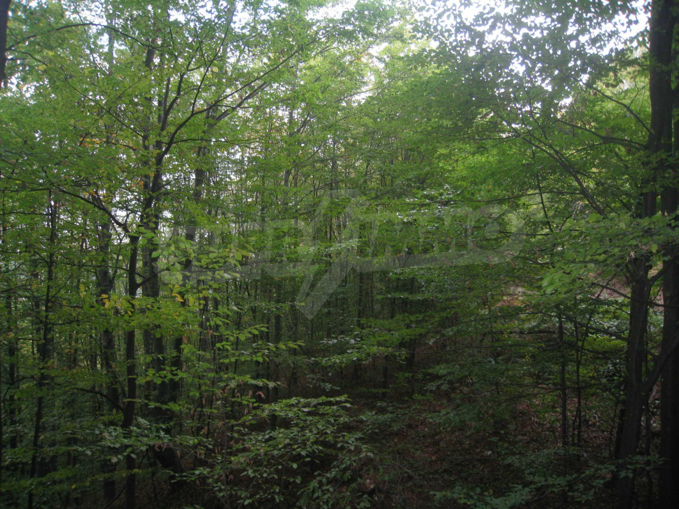 Wald zwischen den Städten Etropole und Pravets