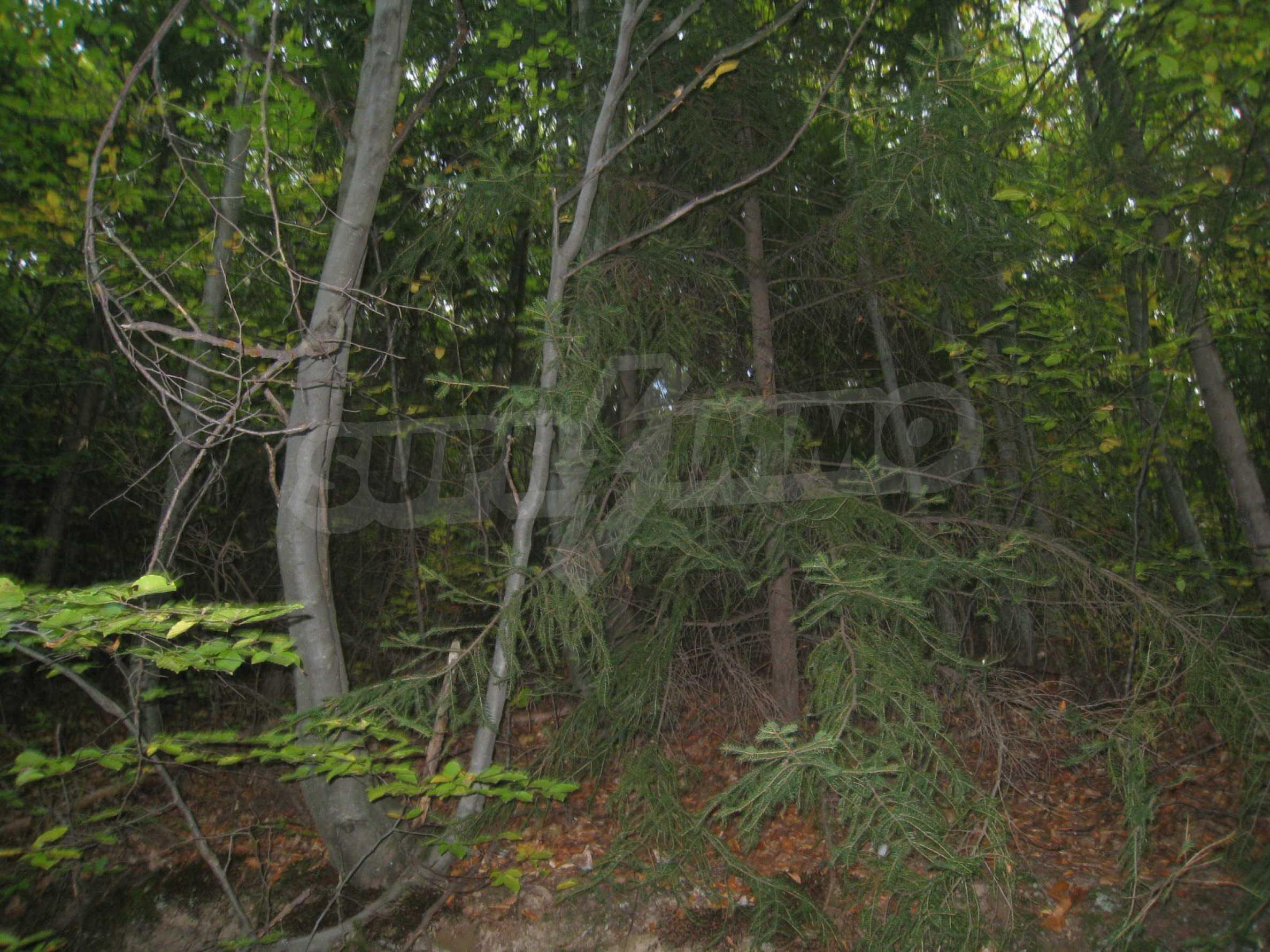 Wald zwischen den Städten Etropole und Pravets 9