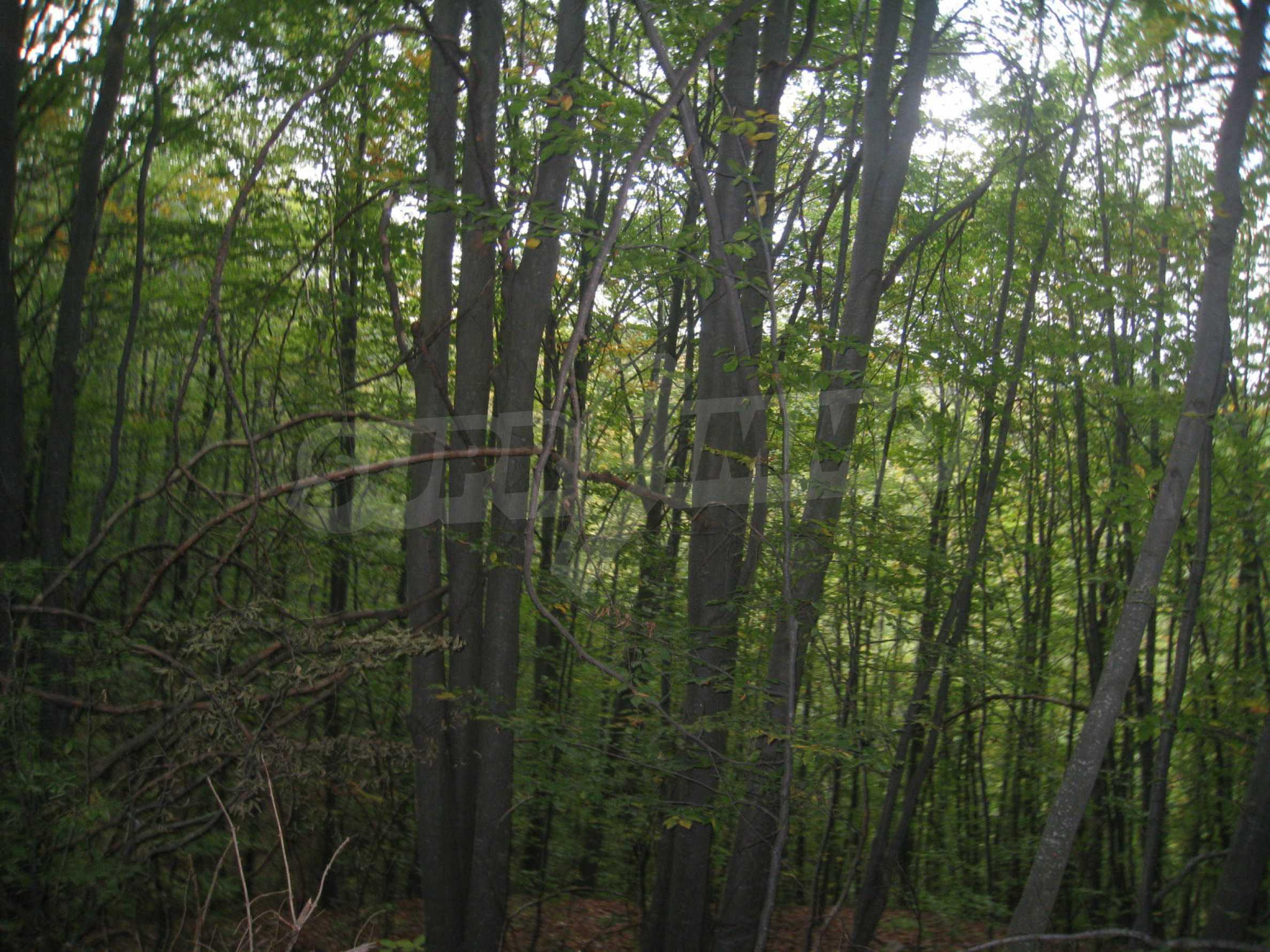 Wald zwischen den Städten Etropole und Pravets 10