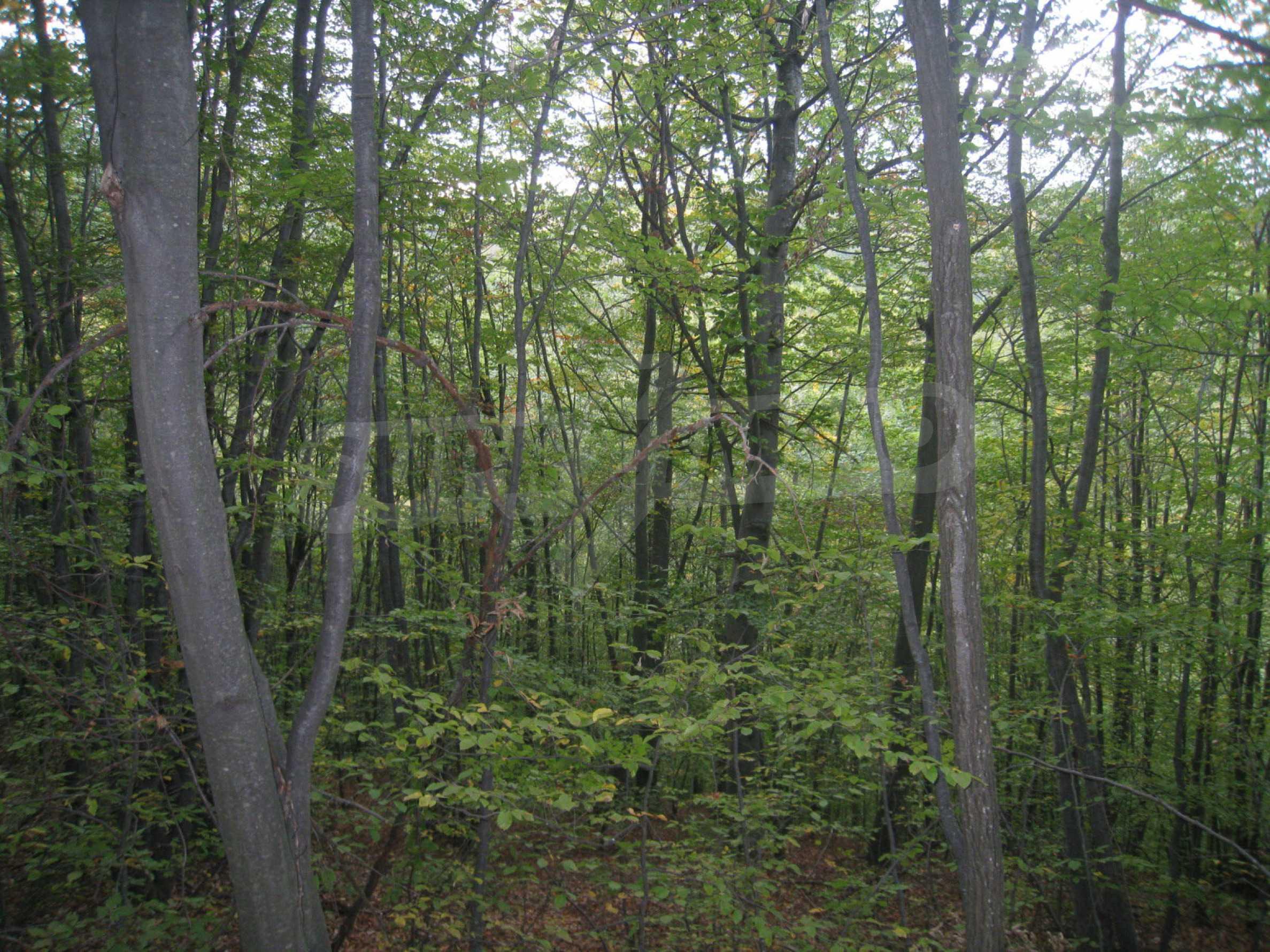 Wald zwischen den Städten Etropole und Pravets 11