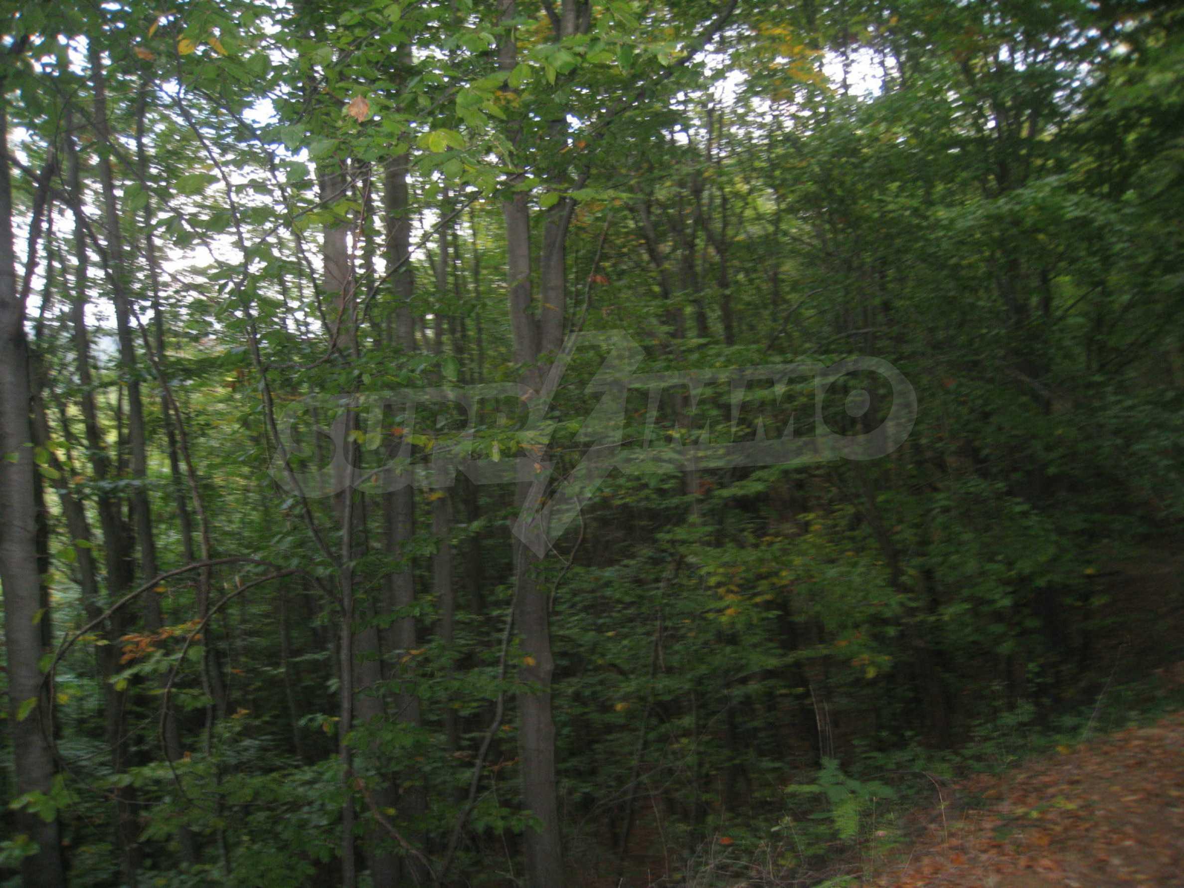 Wald zwischen den Städten Etropole und Pravets 13