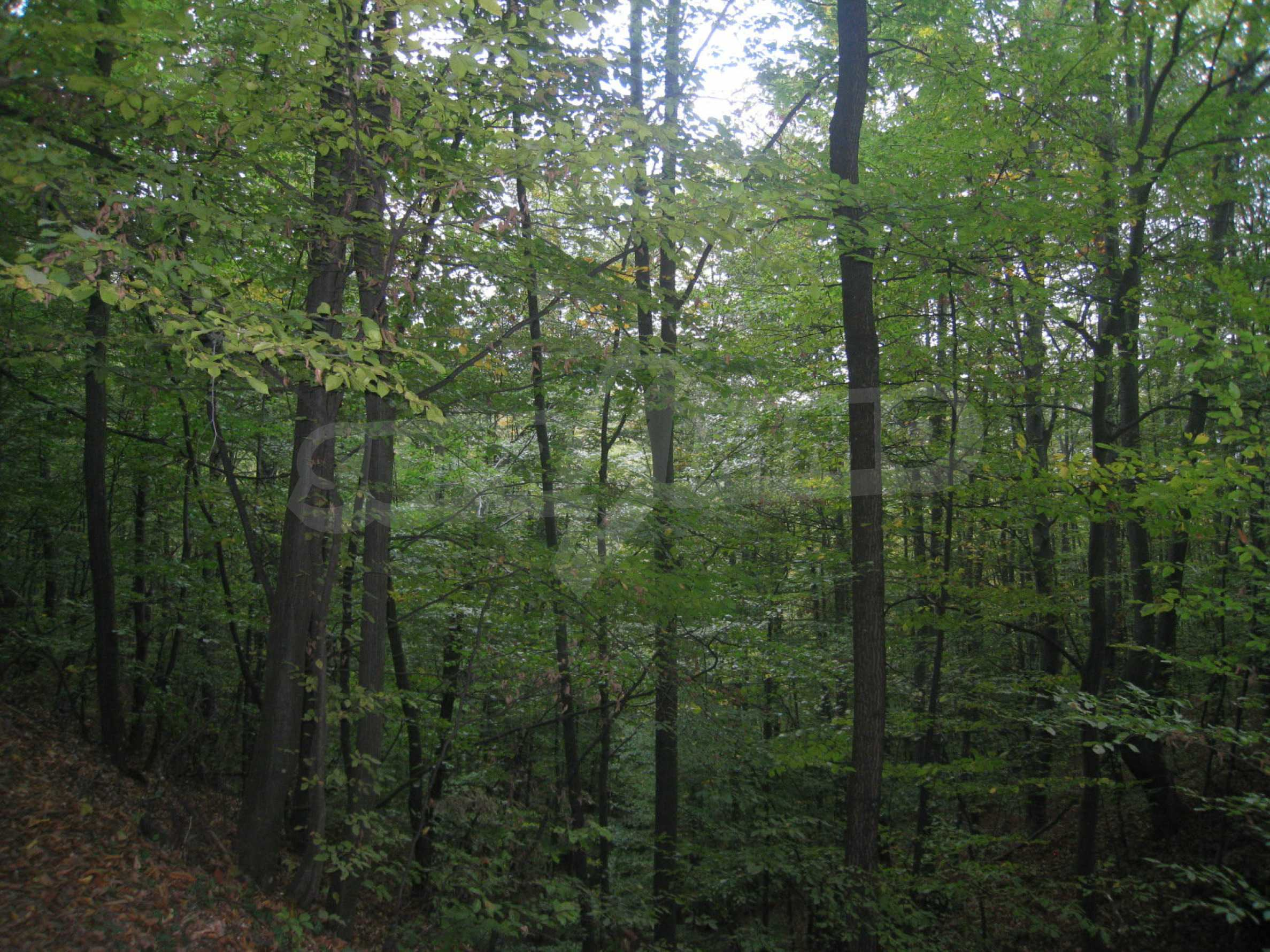 Wald zwischen den Städten Etropole und Pravets 1