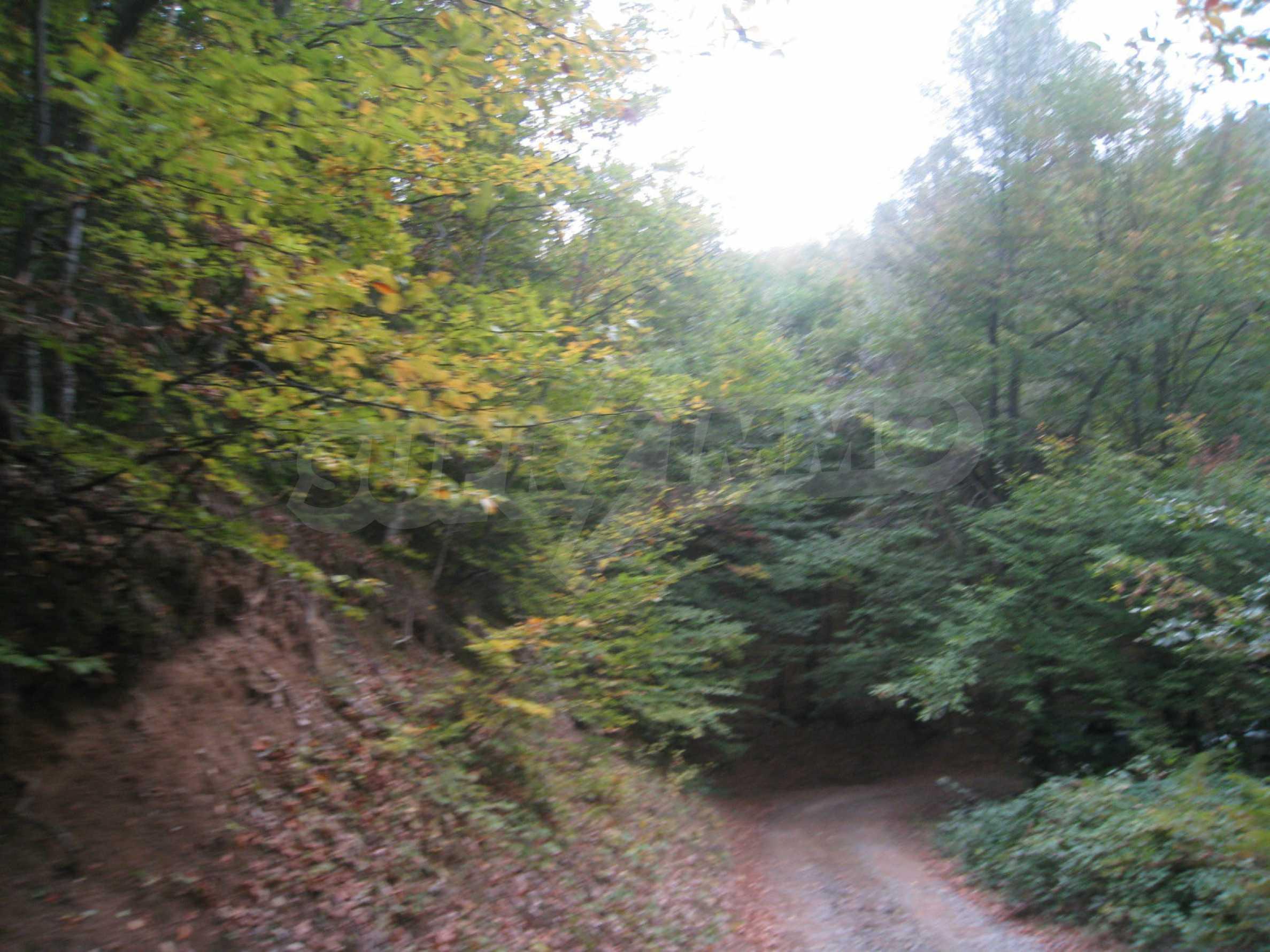 Wald zwischen den Städten Etropole und Pravets 22