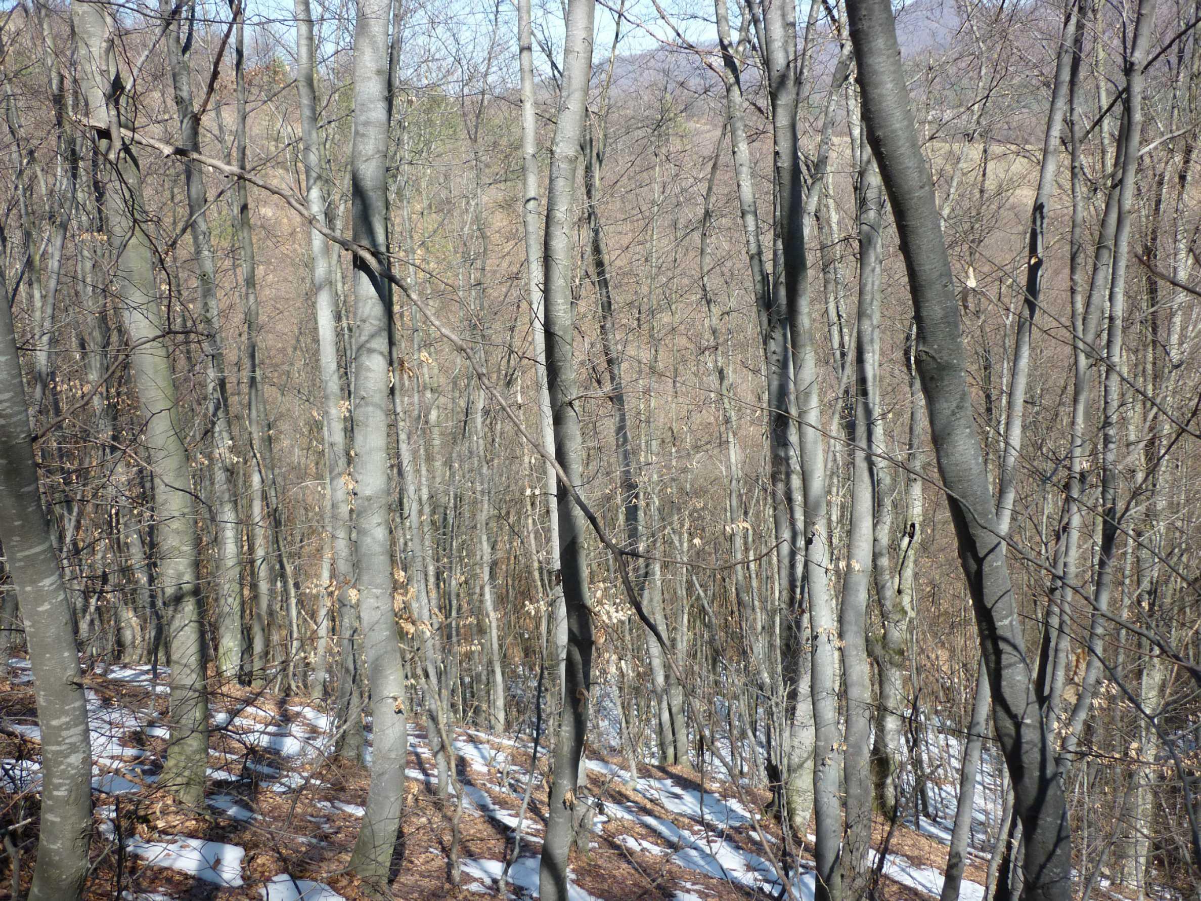 Wald zwischen den Städten Etropole und Pravets 27