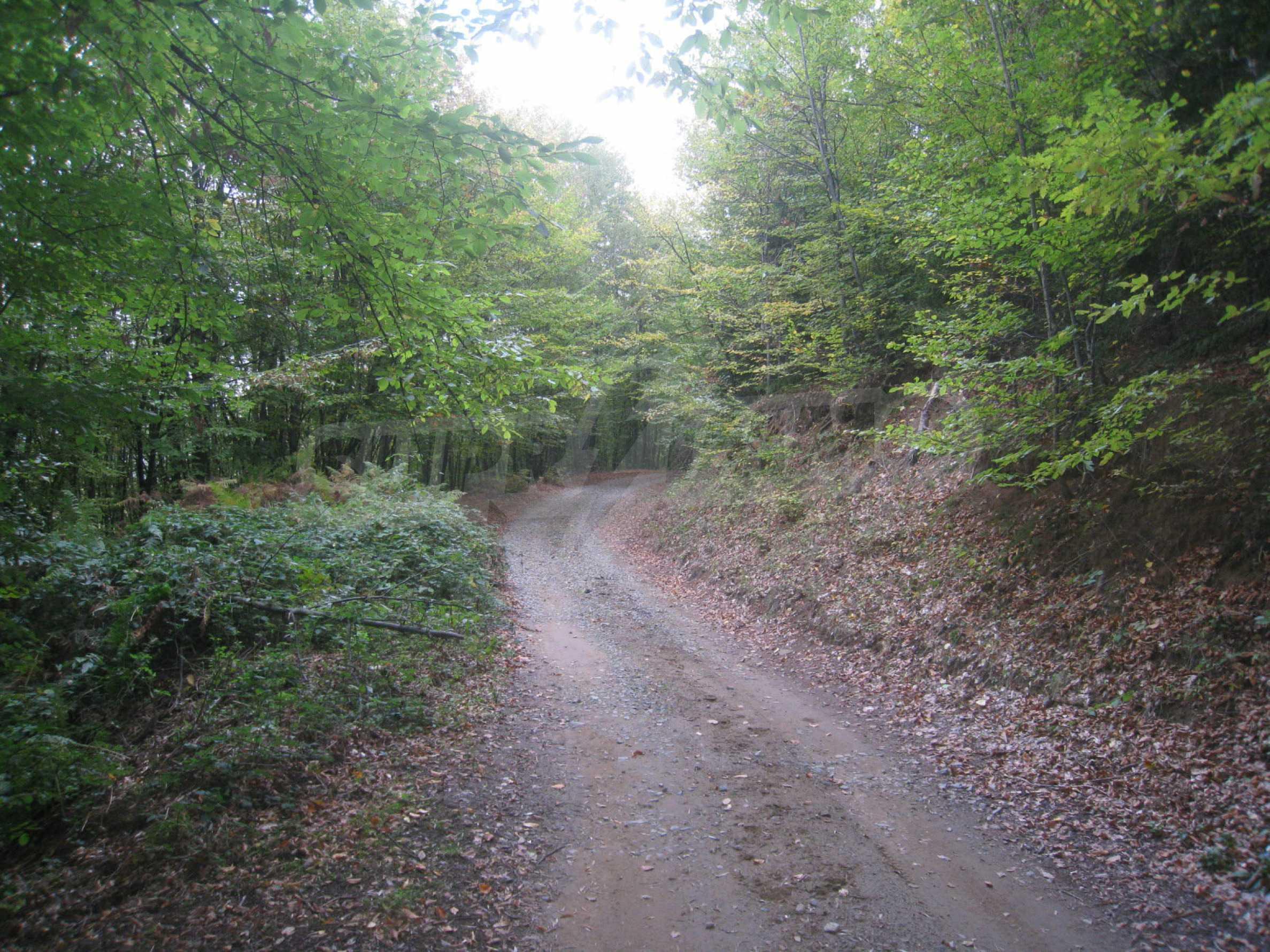 Wald zwischen den Städten Etropole und Pravets 5