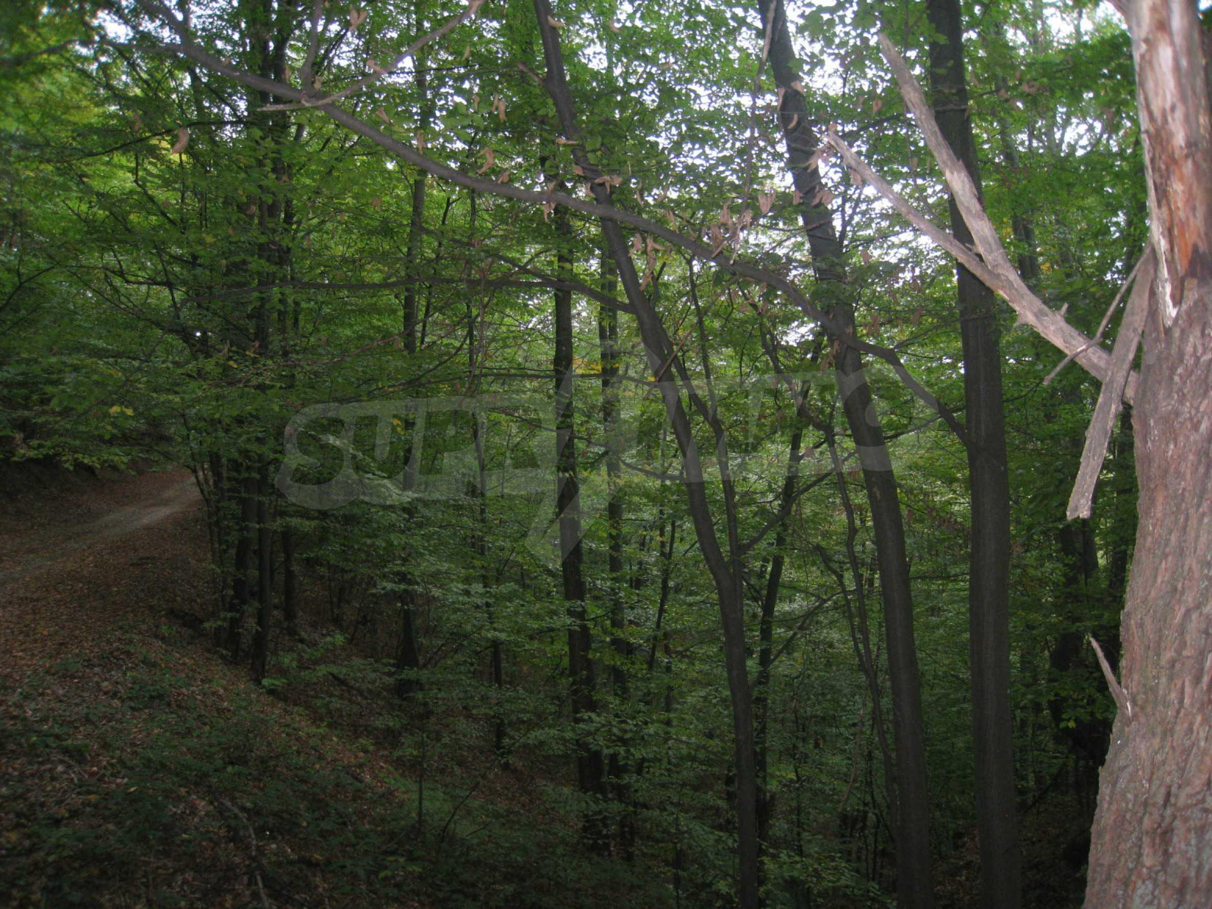 Wald zwischen den Städten Etropole und Pravets 6