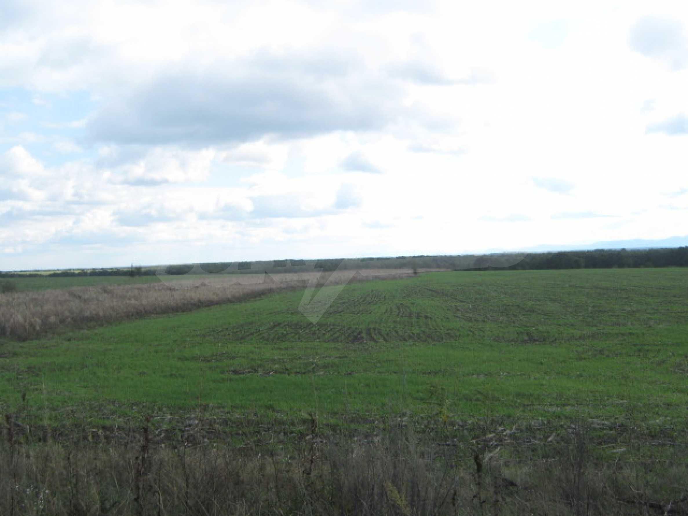 Сельскохозяйственная земля вблизи г. Видин