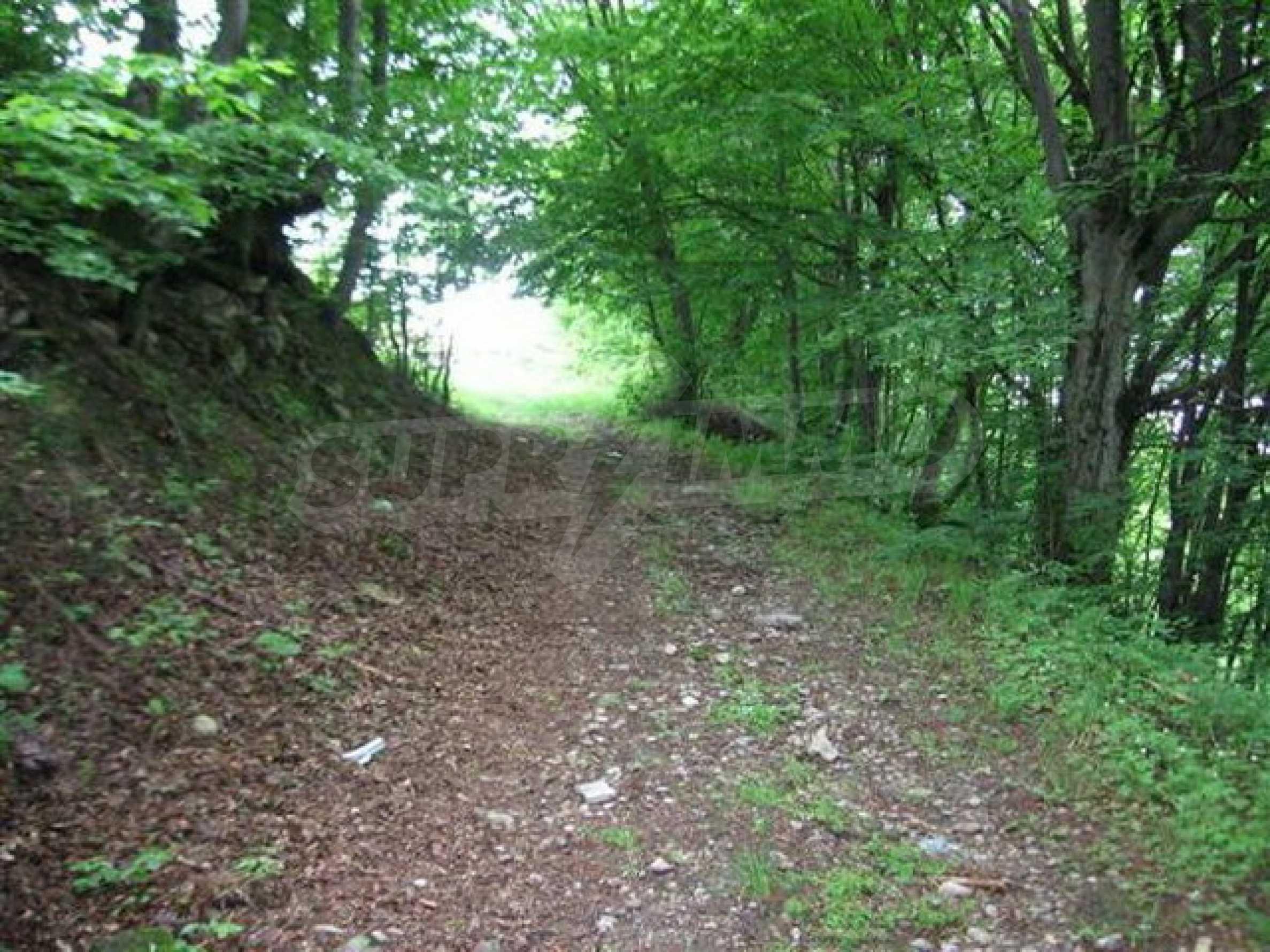 Ackerland und Wald 2