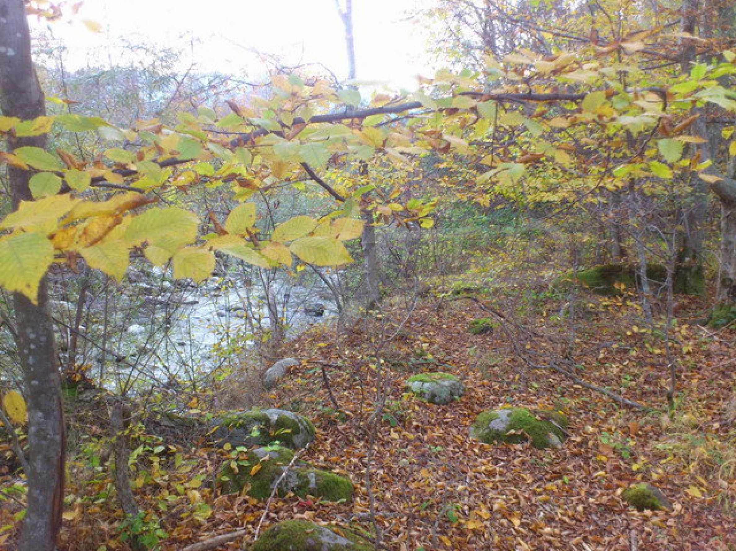 Ackerland und Wald 4