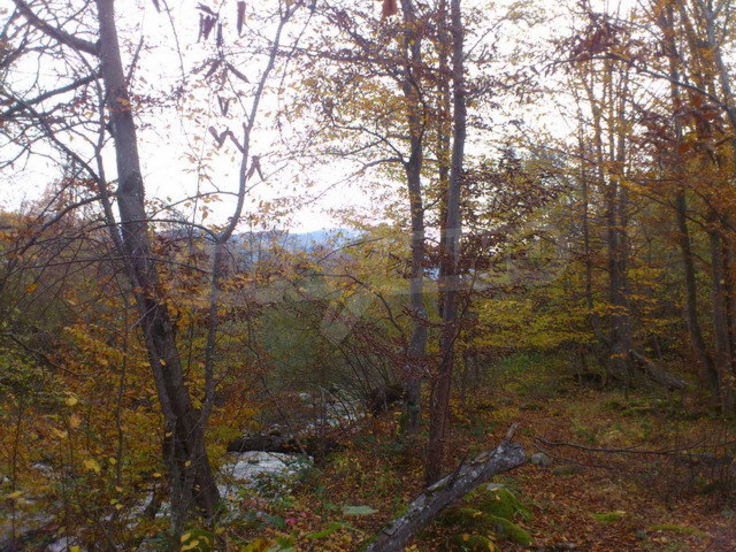 Ackerland und Wald 5