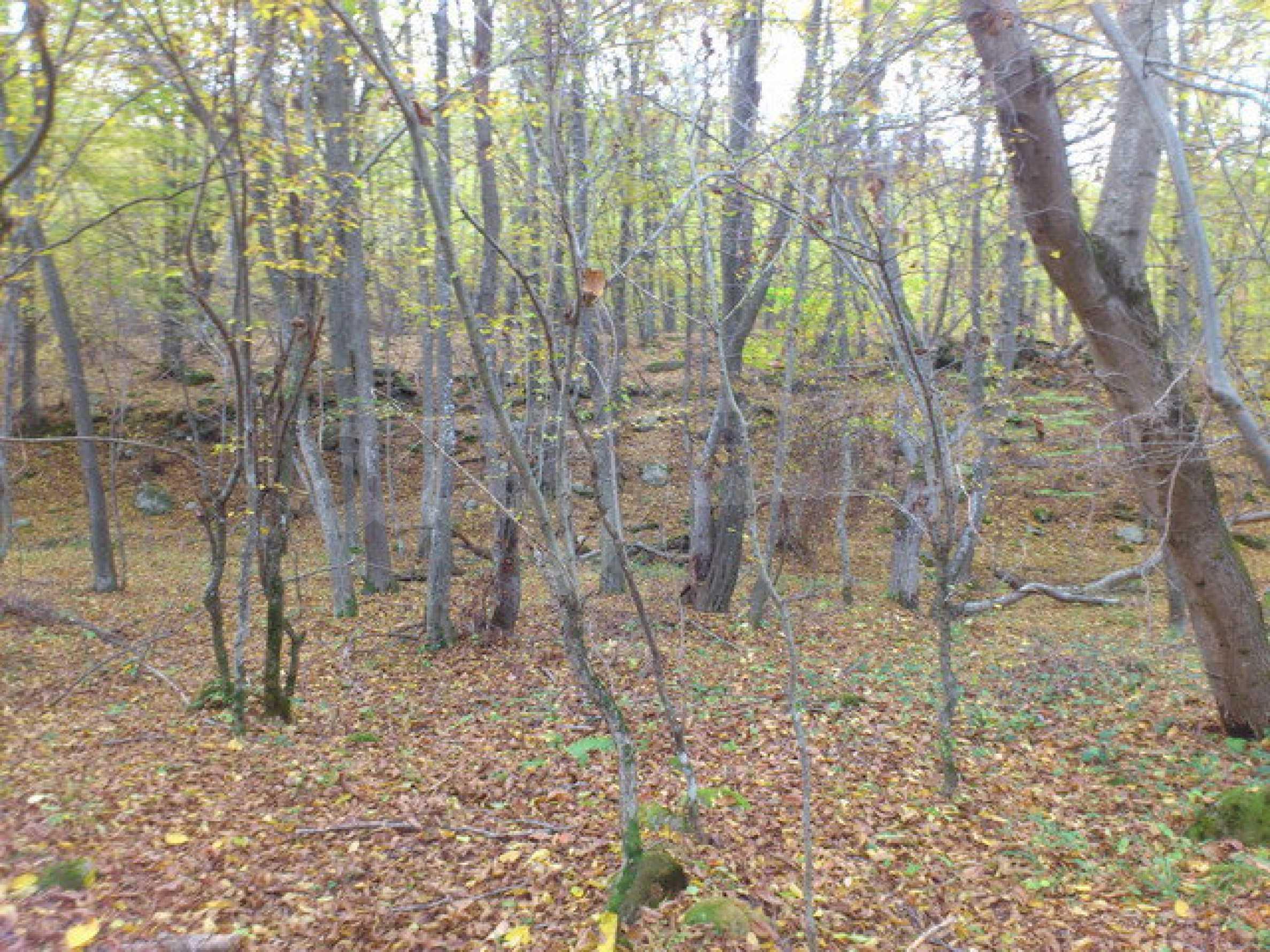 Ackerland und Wald 7