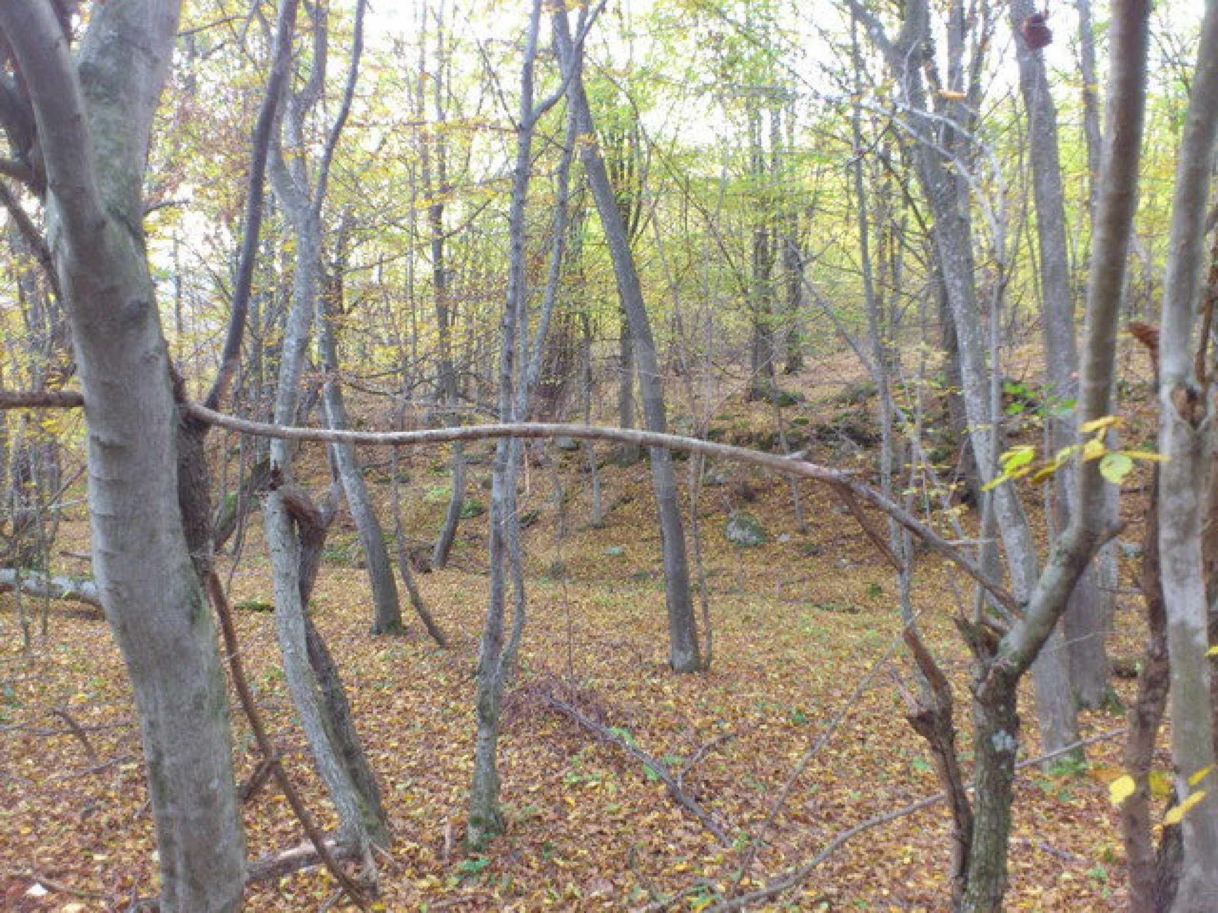 Ackerland und Wald 8