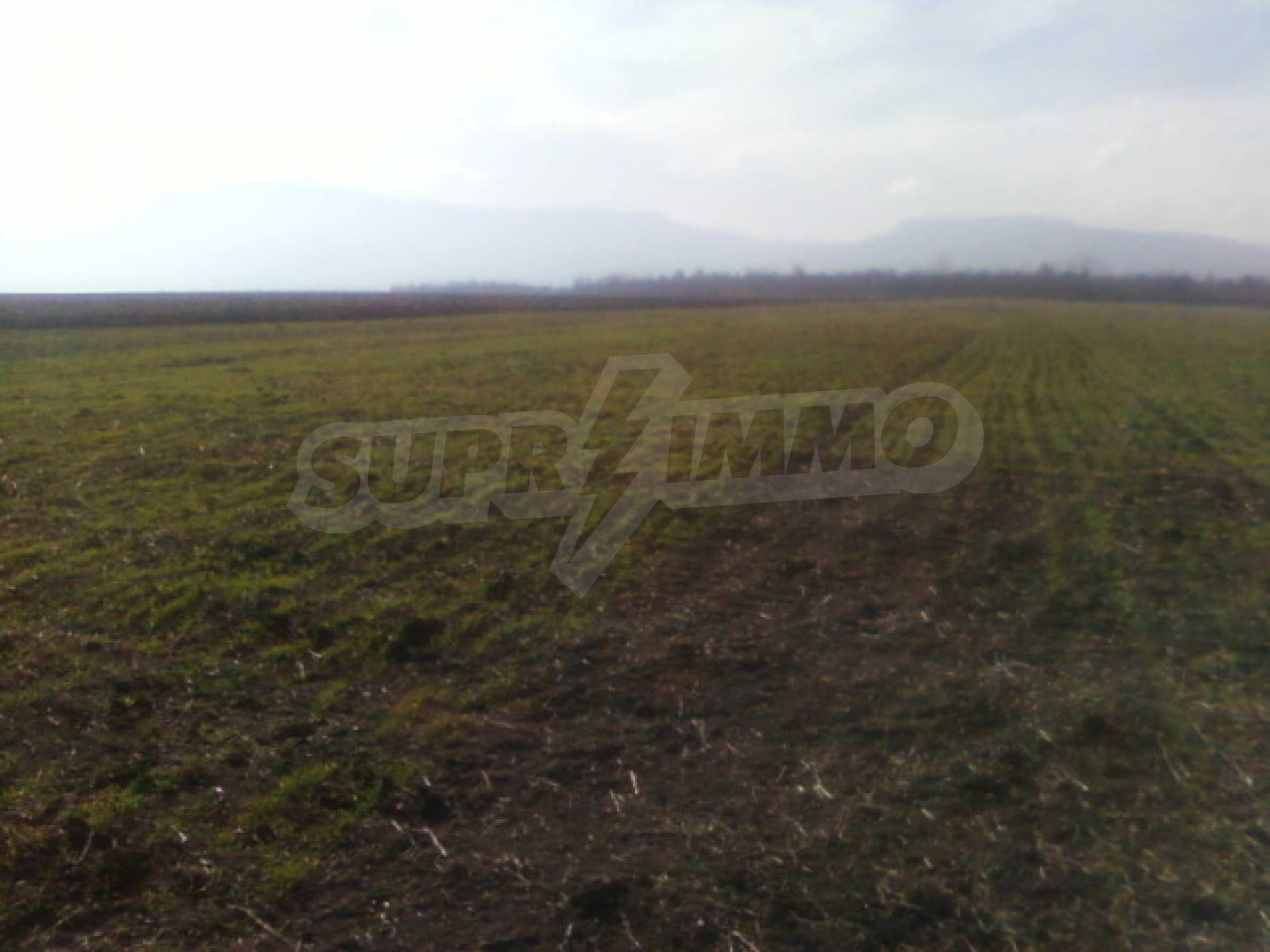Продажа сельскохозяйственной земли, р-н Видин 1