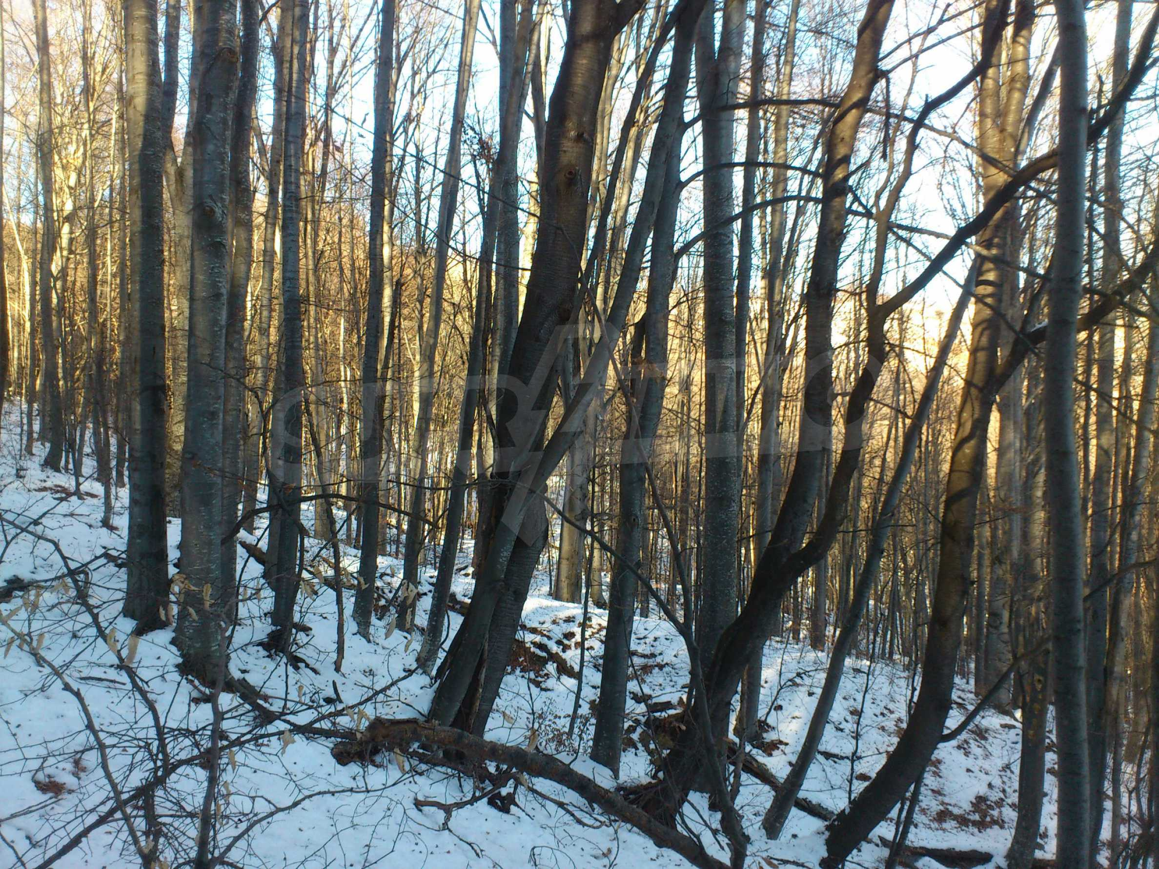 Deciduous forest near Aprilci 15