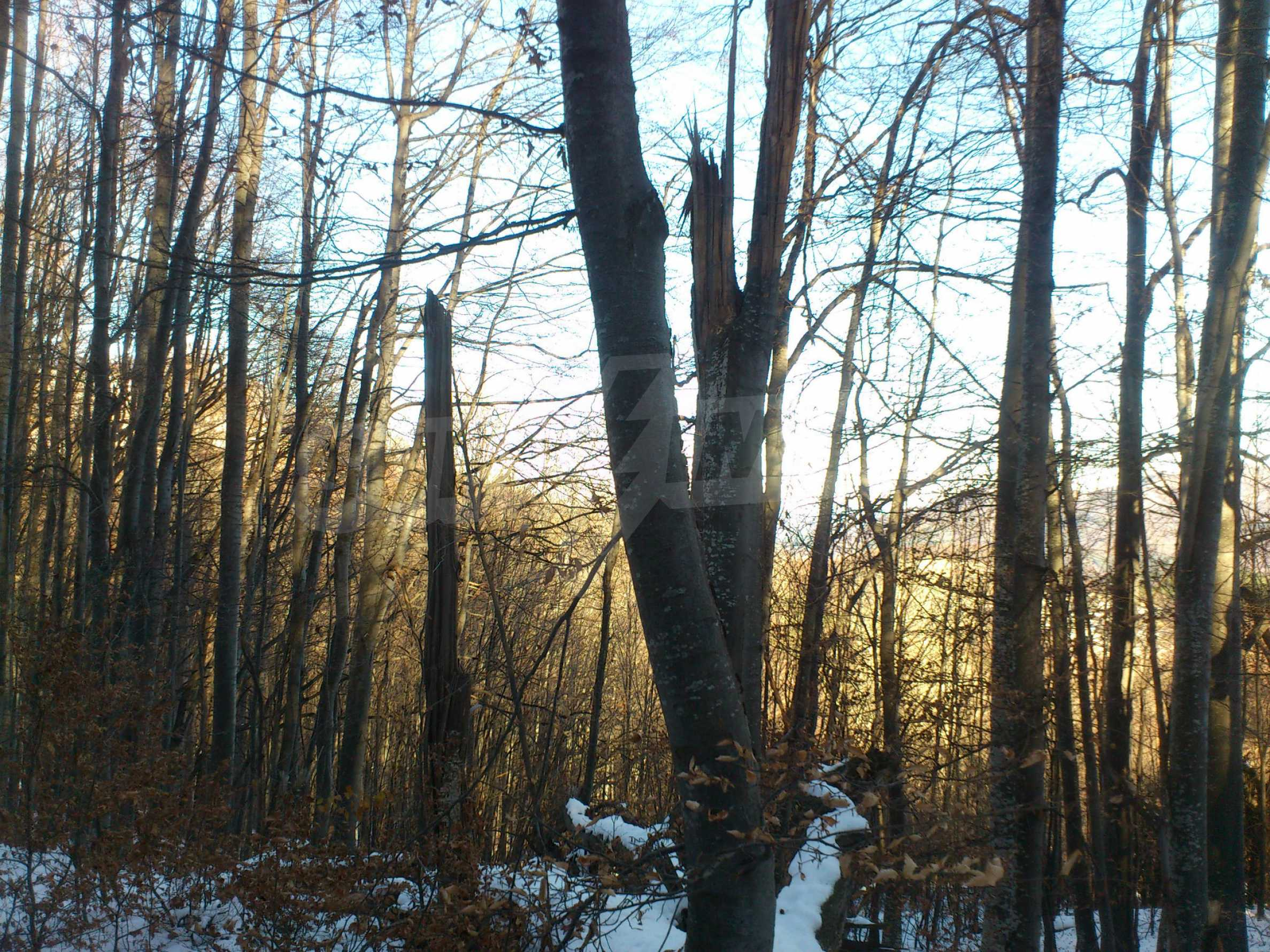 Deciduous forest near Aprilci 19