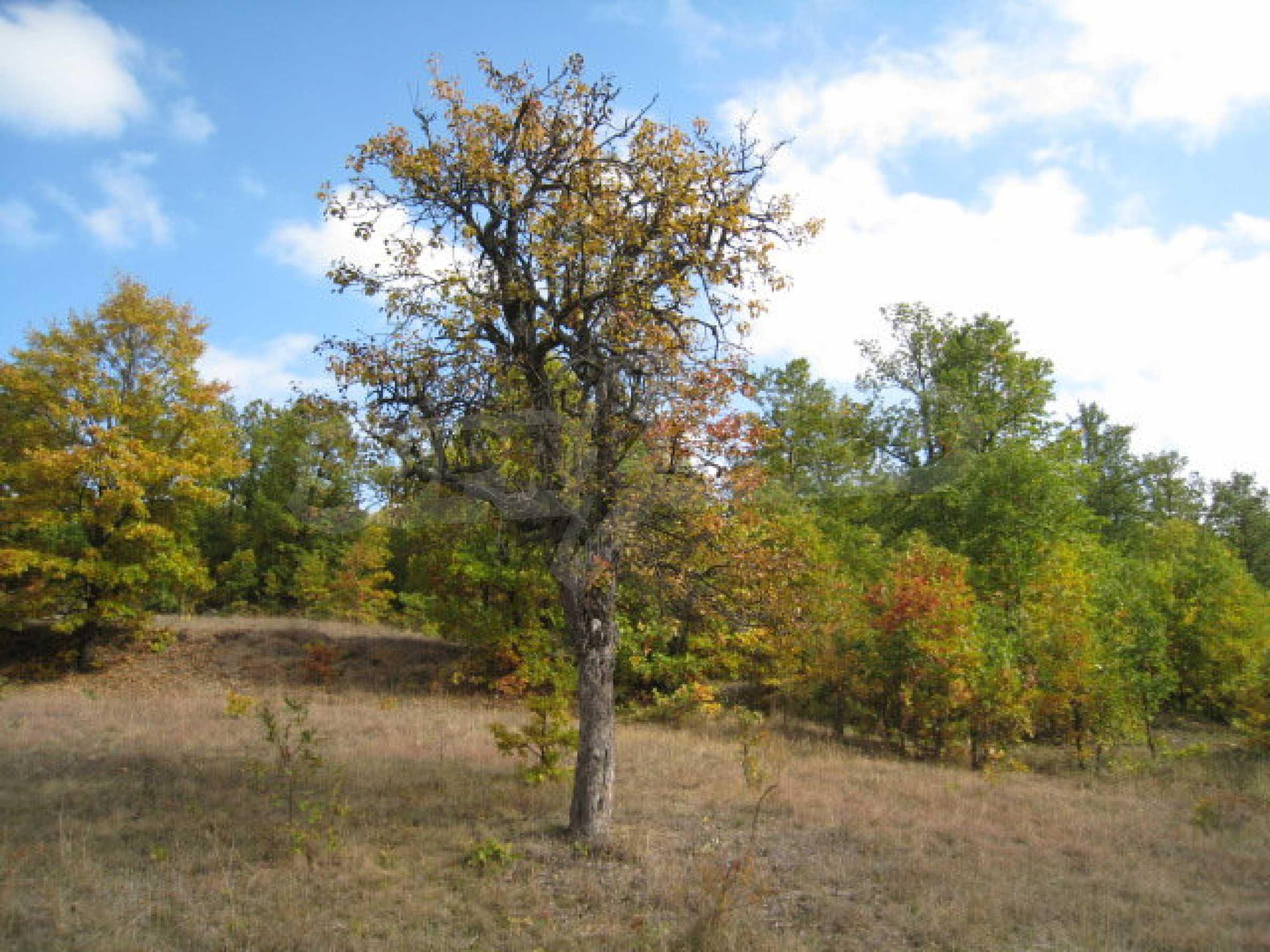 Development land near the town of Kostenets 1
