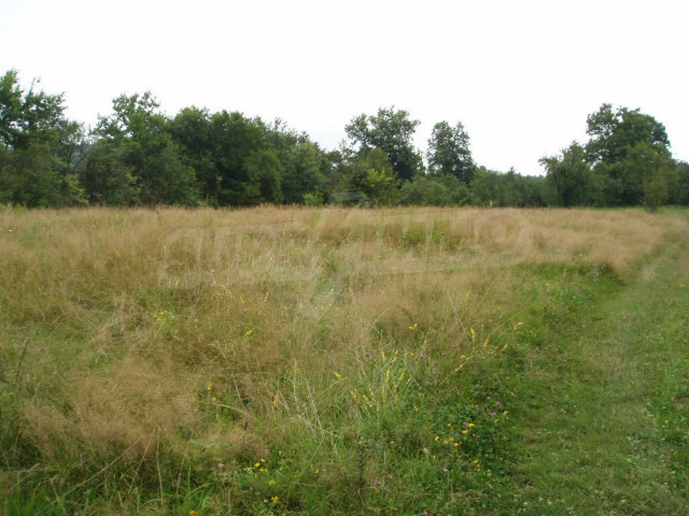 Big plots of land with great potential