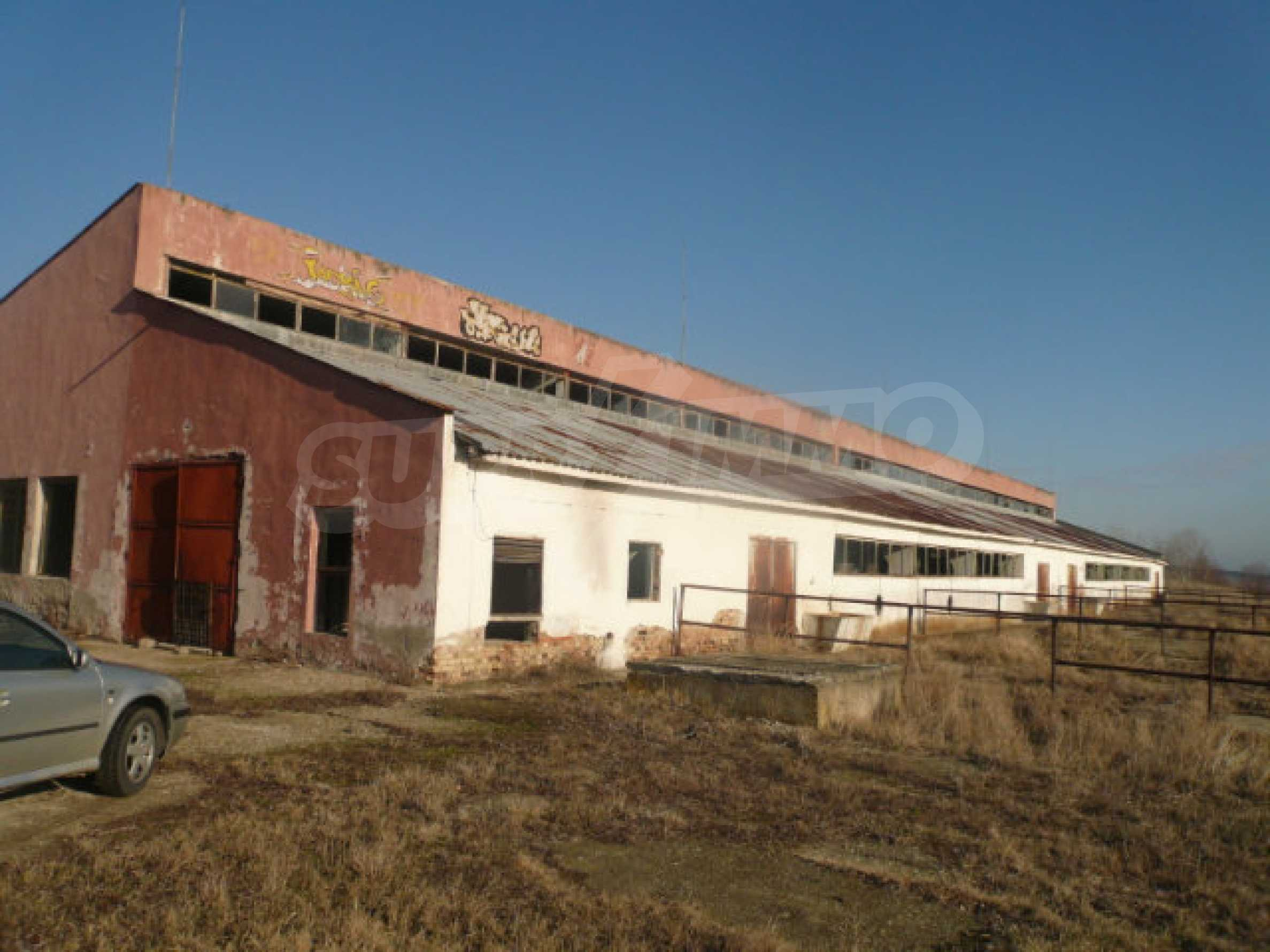Guter Zustand Rinderfarm in der Nähe von Vidin