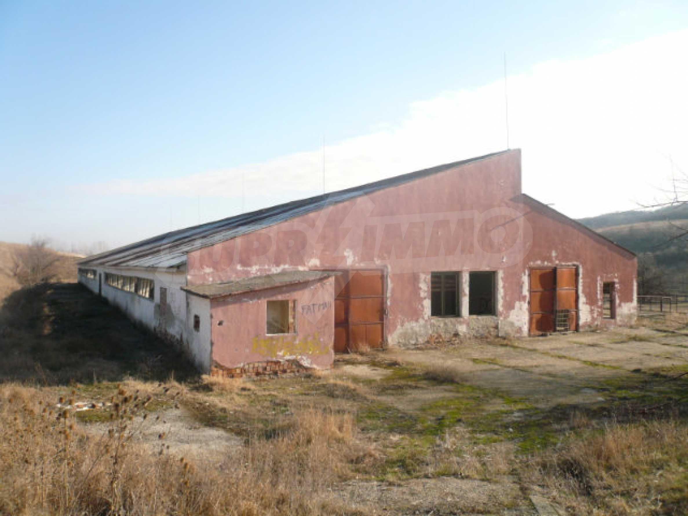 Guter Zustand Rinderfarm in der Nähe von Vidin 1