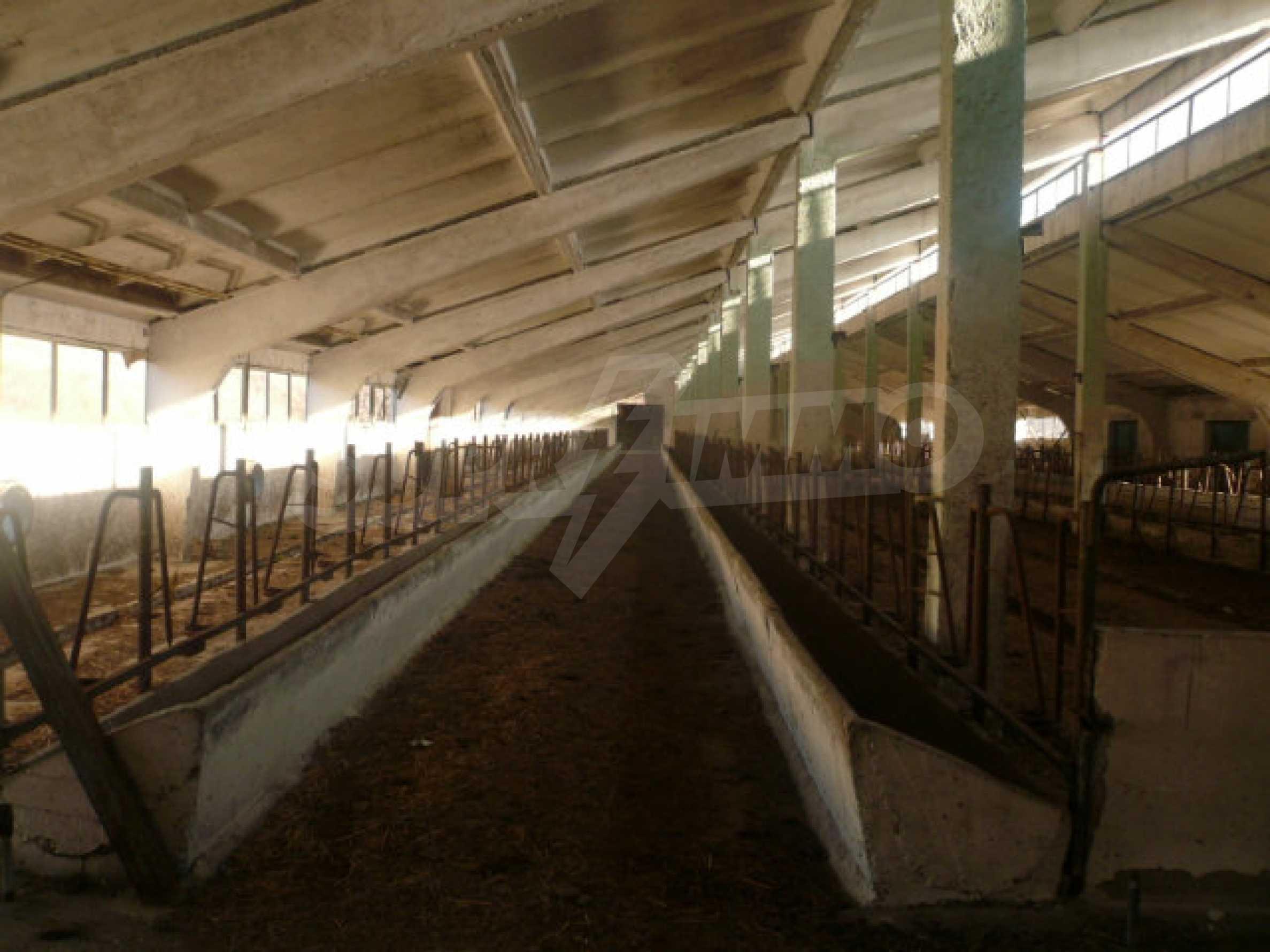 Guter Zustand Rinderfarm in der Nähe von Vidin 3