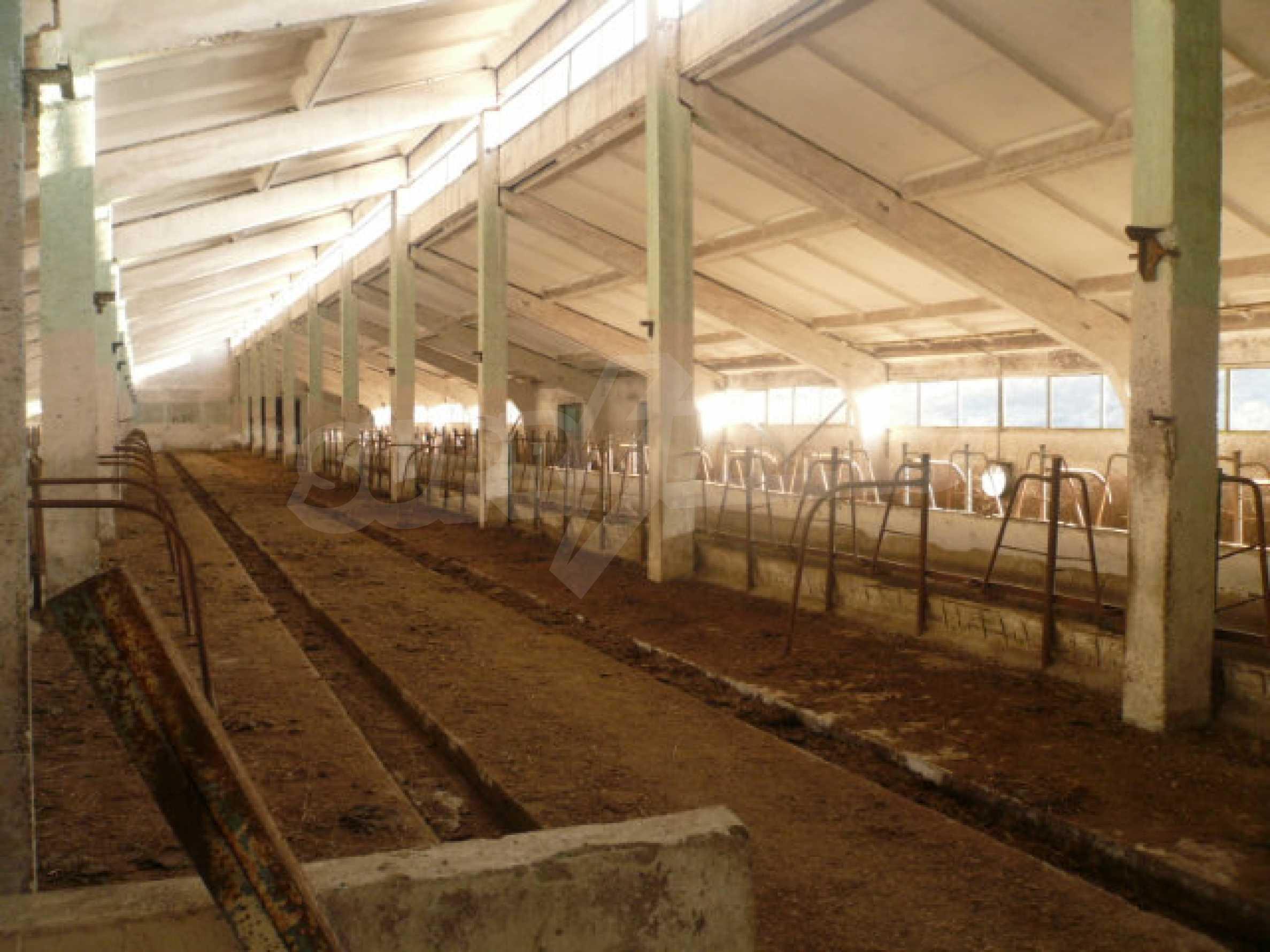 Guter Zustand Rinderfarm in der Nähe von Vidin 4