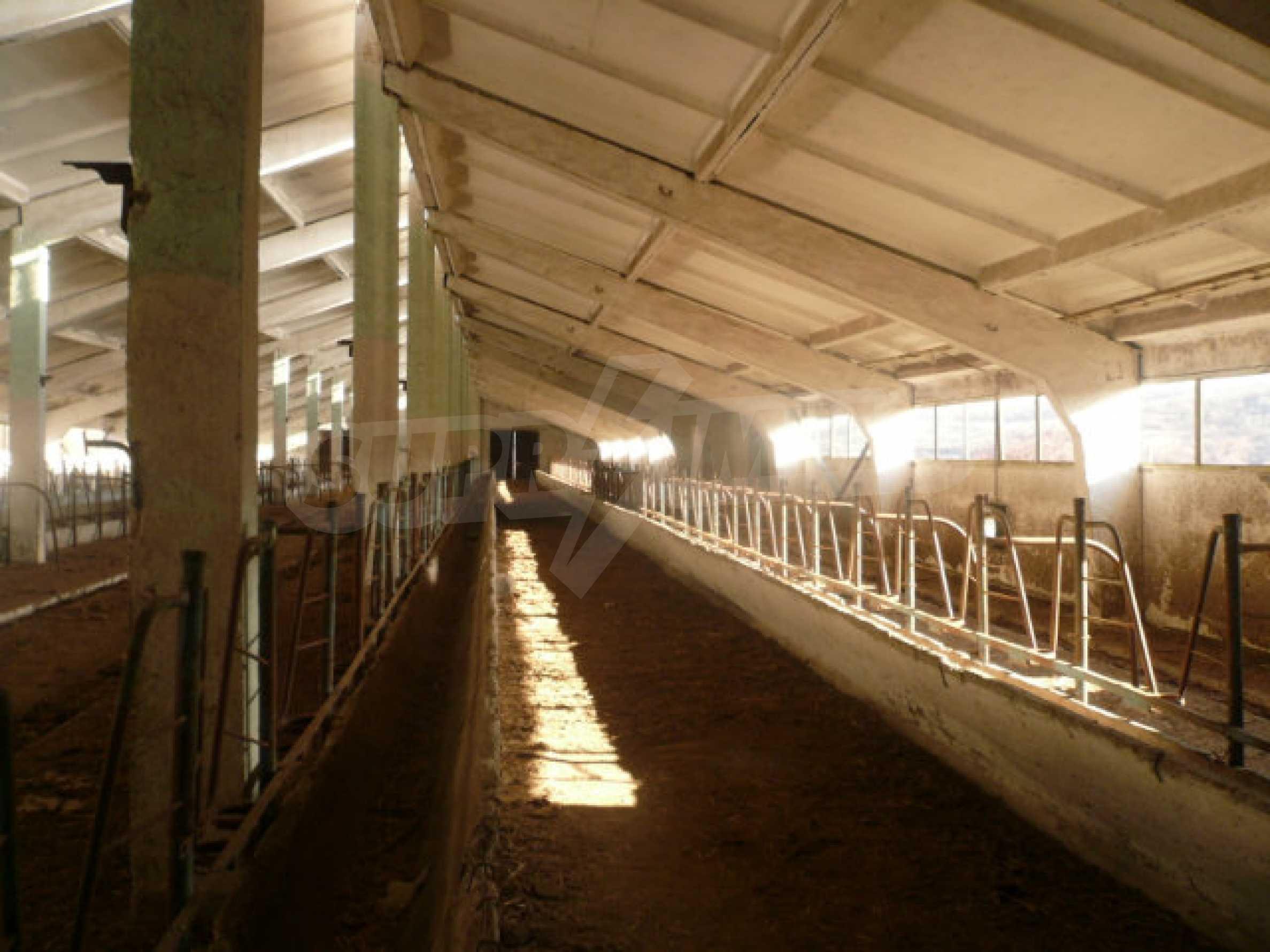 Guter Zustand Rinderfarm in der Nähe von Vidin 5