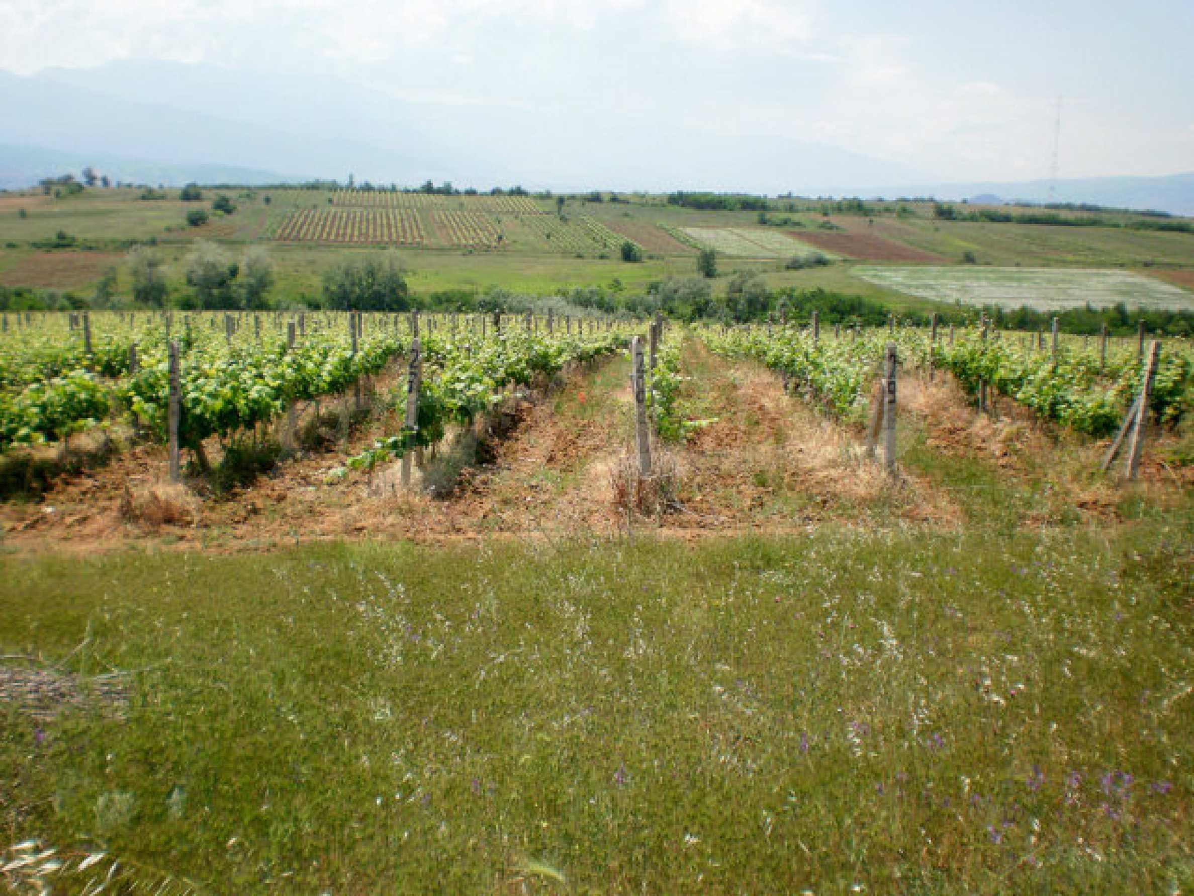 Agricultural land for sale near Sandanski 1