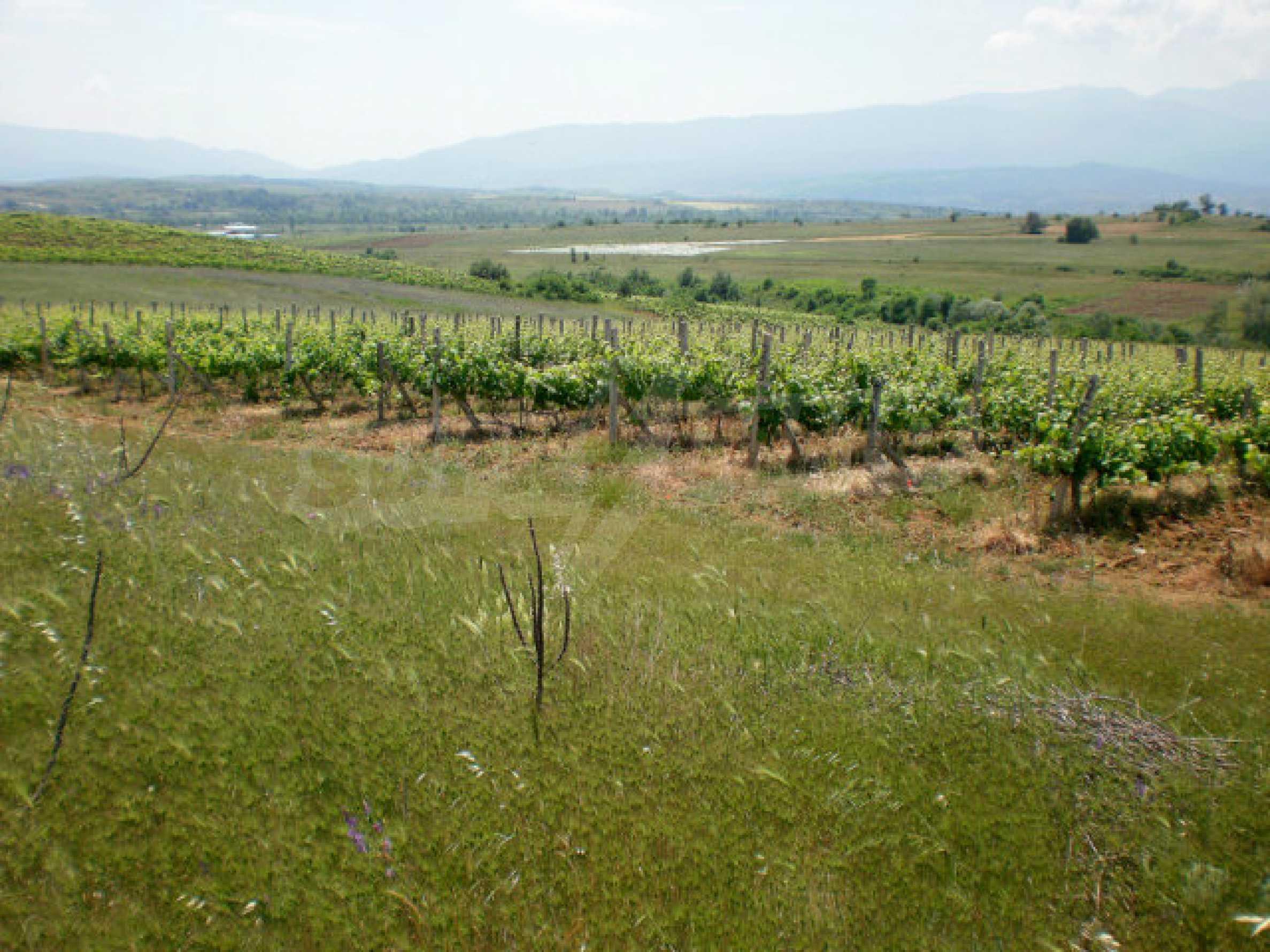 Agricultural land for sale near Sandanski 2