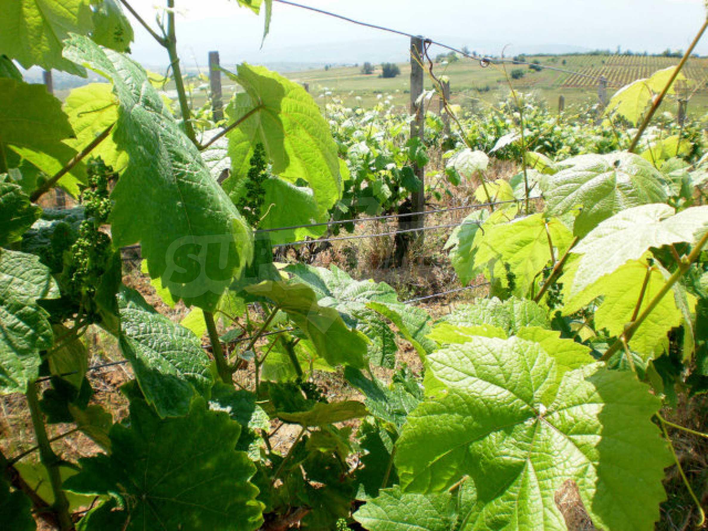 Agricultural land for sale near Sandanski 3