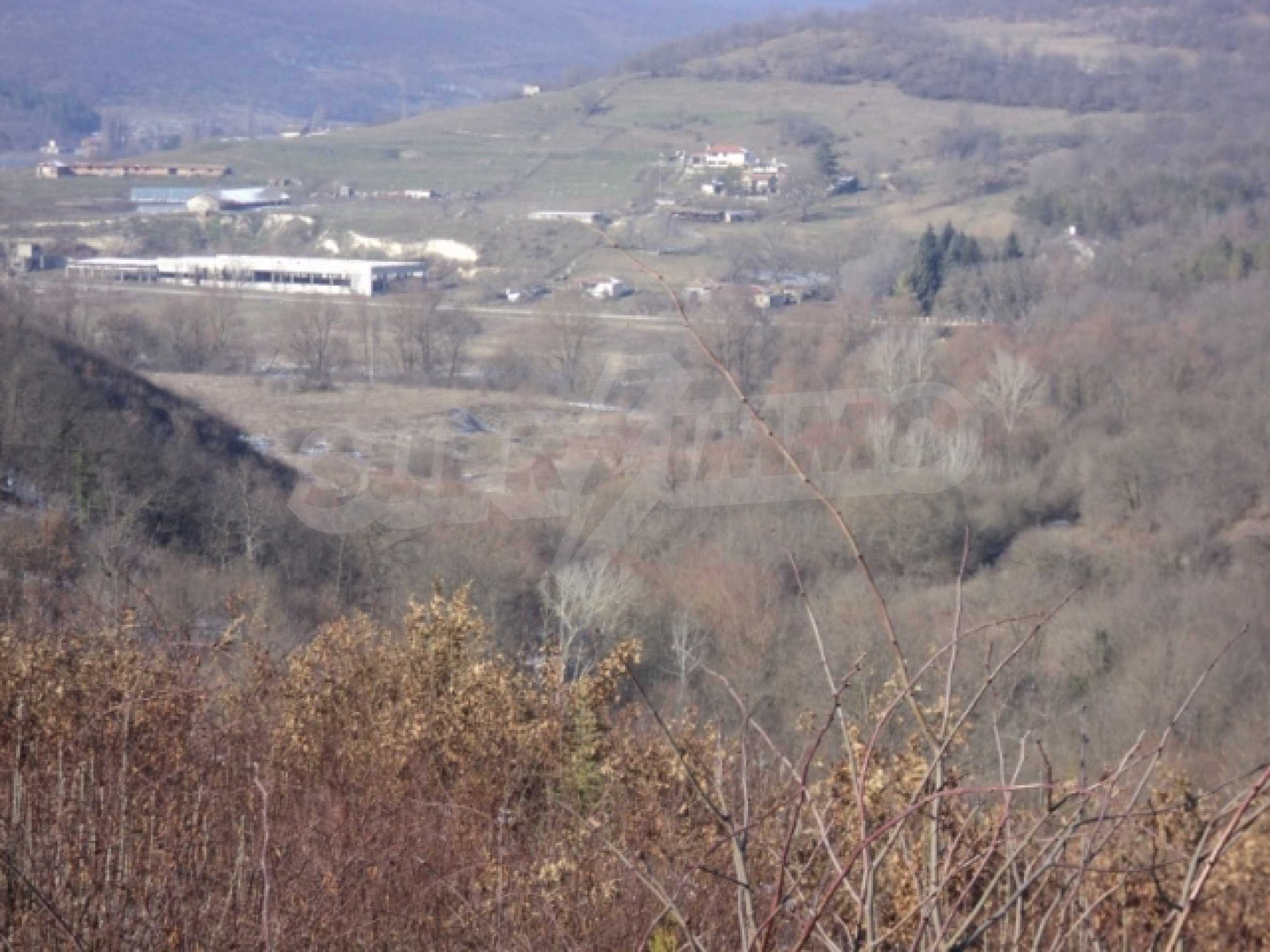 Forest and abonded three plants land for sale
