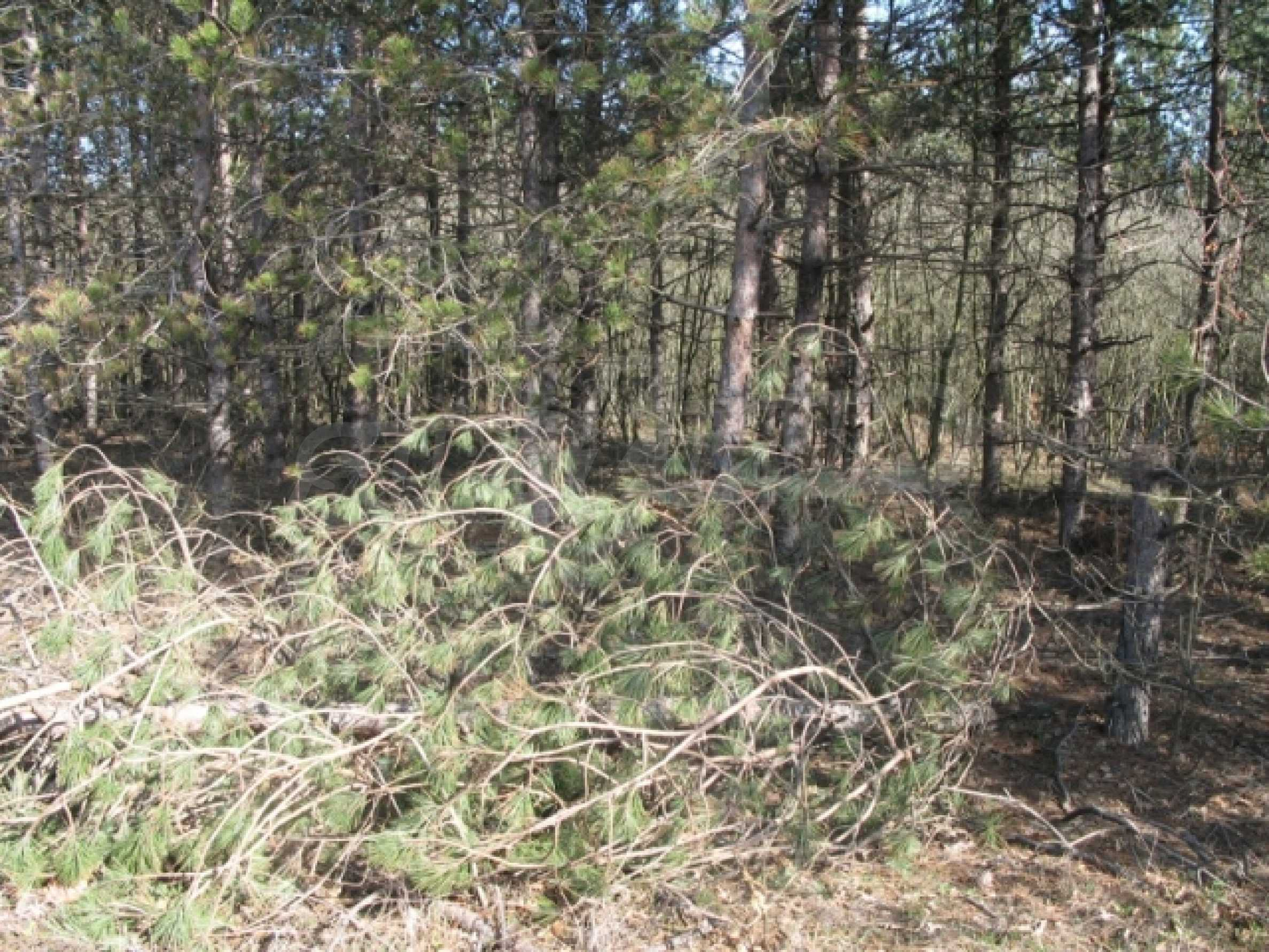 Forest and abonded three plants land for sale  2