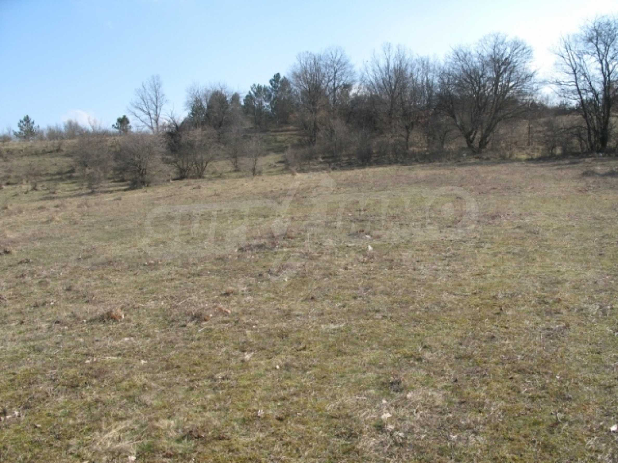 Forest and abonded three plants land for sale  3